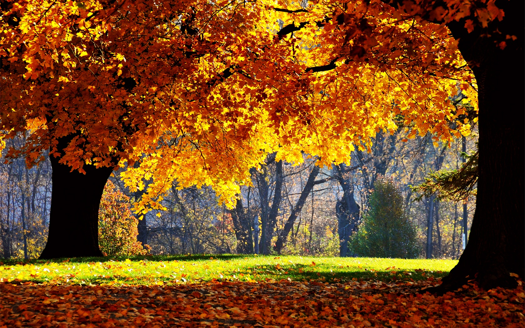 autumn wallpapers hd best - photo #35