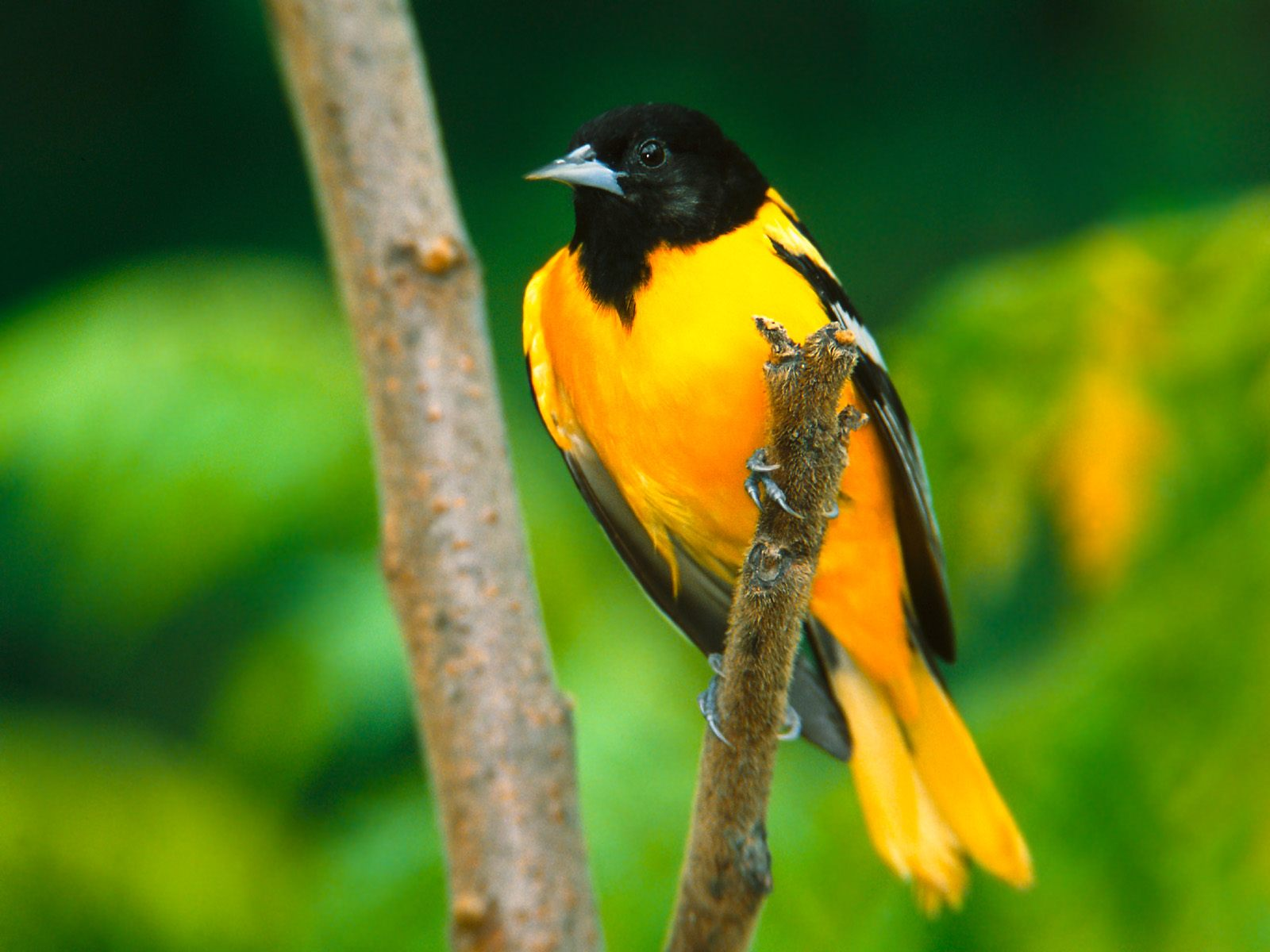 Full Hd Bird Pictures Full Hd Pictures
