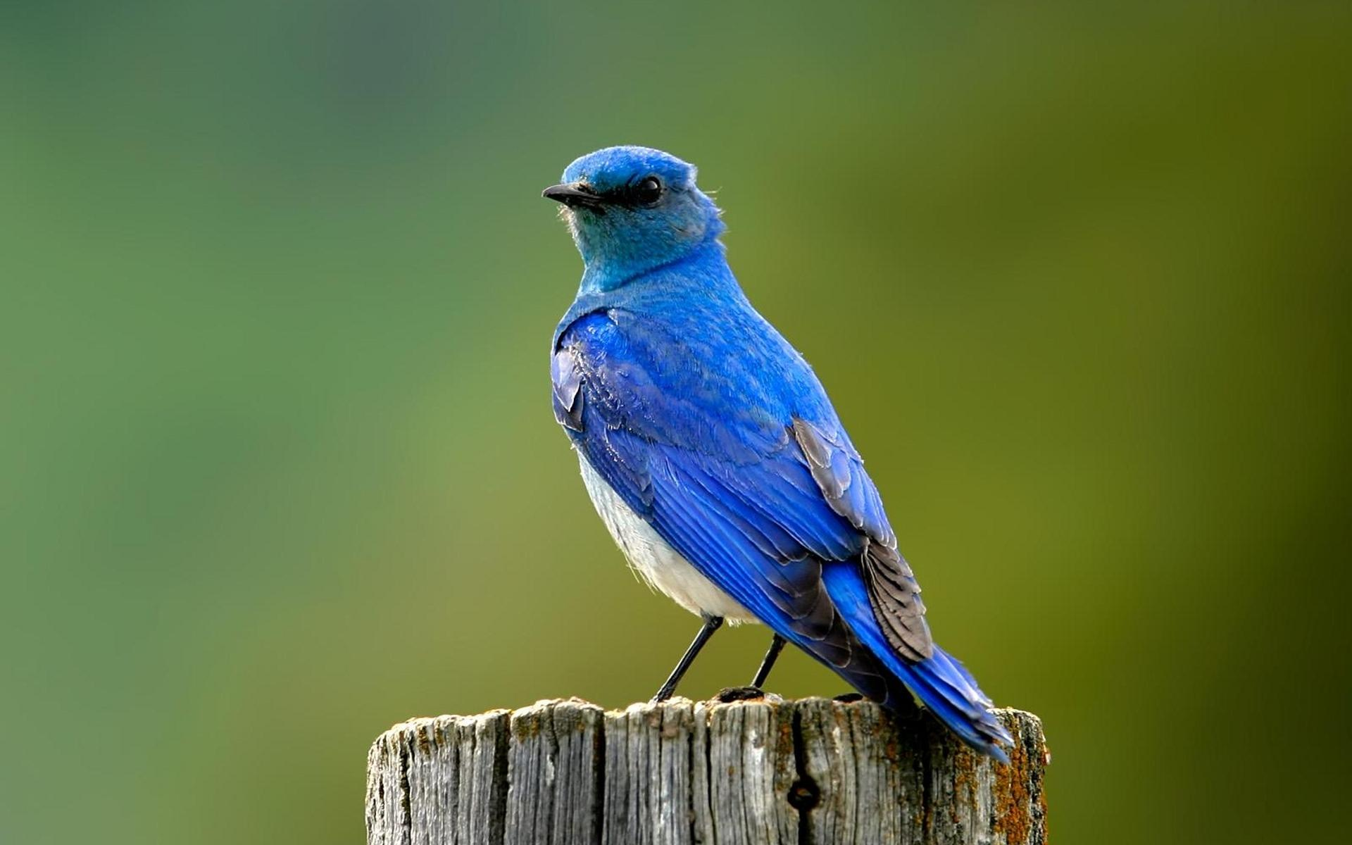 Full Hd Birds Wallpapers Full Hd Pictures