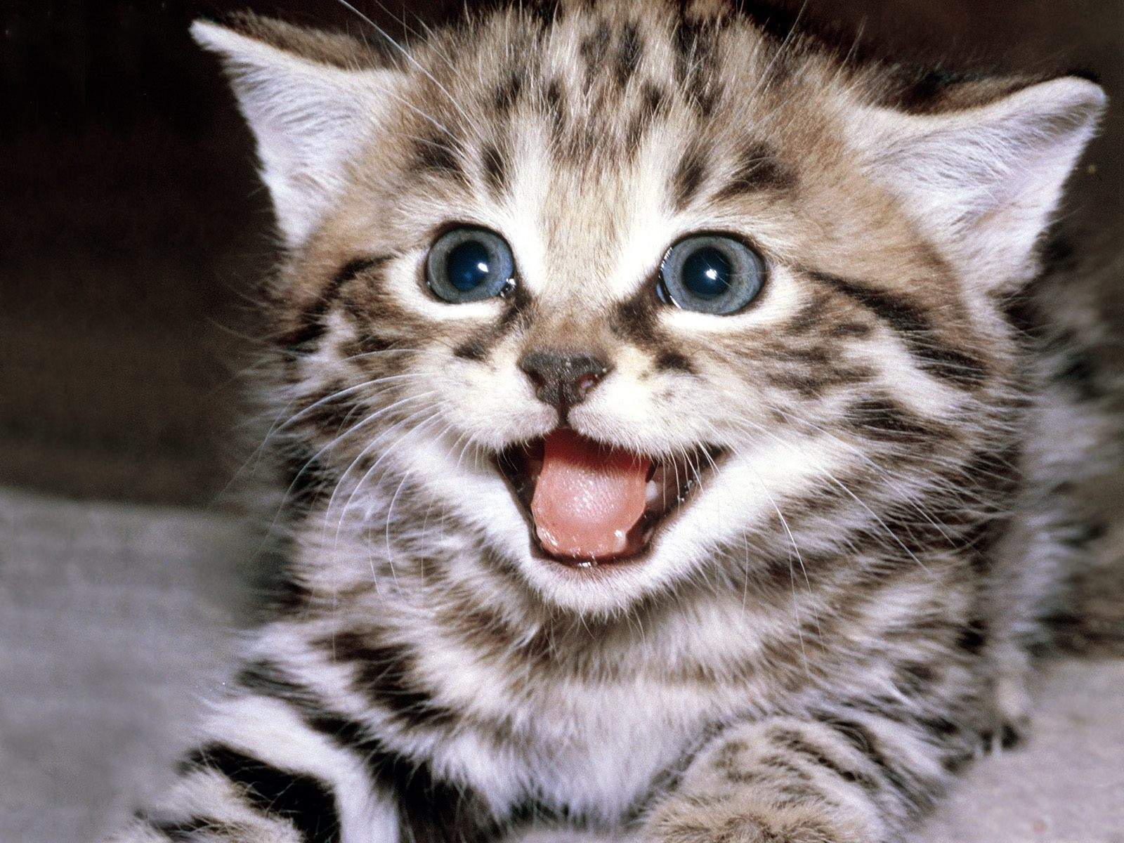 1000  ideas about Smiling Cat on Pinterest | Cat face, Baby ...