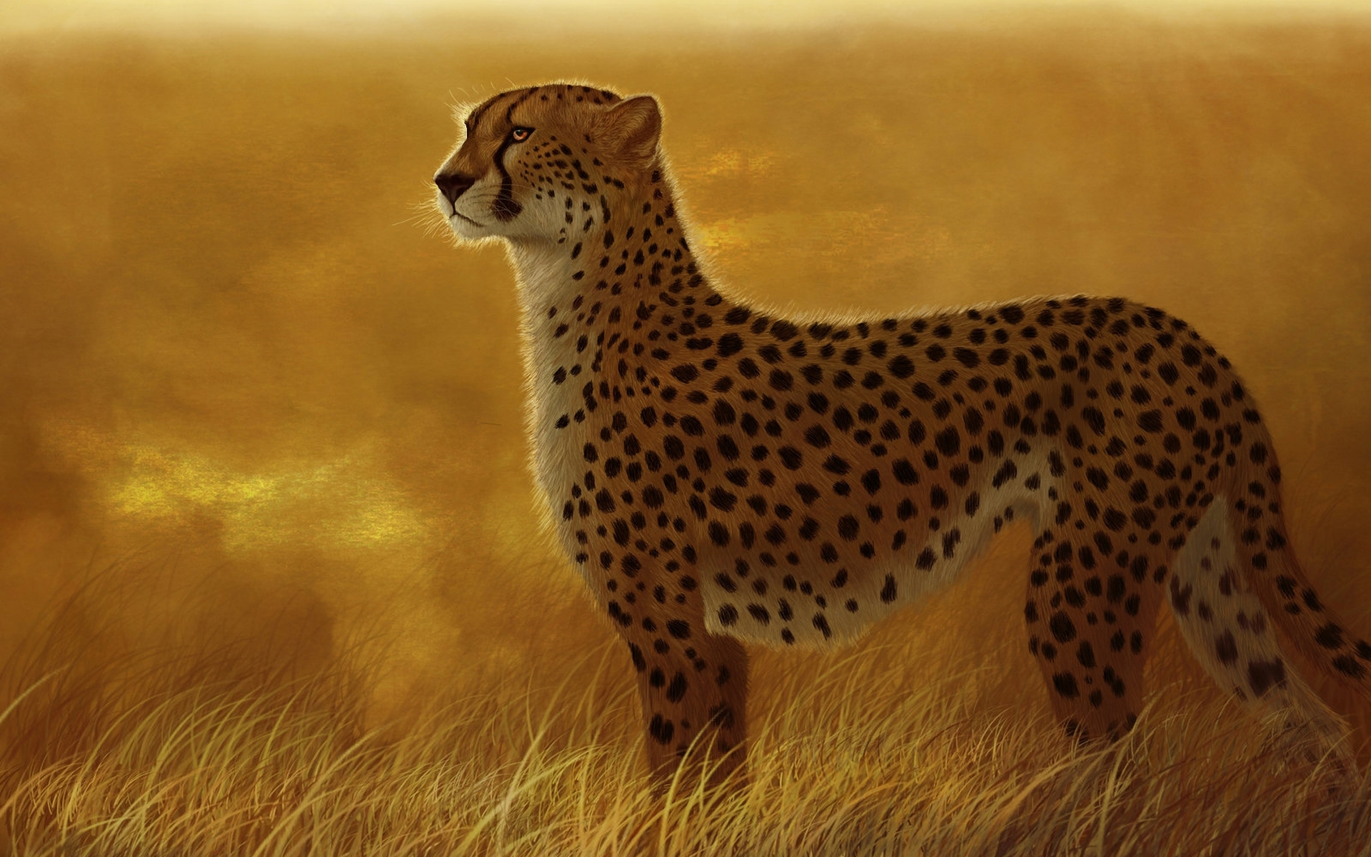 cheetah wallpapers for pc desktop full hd pictures