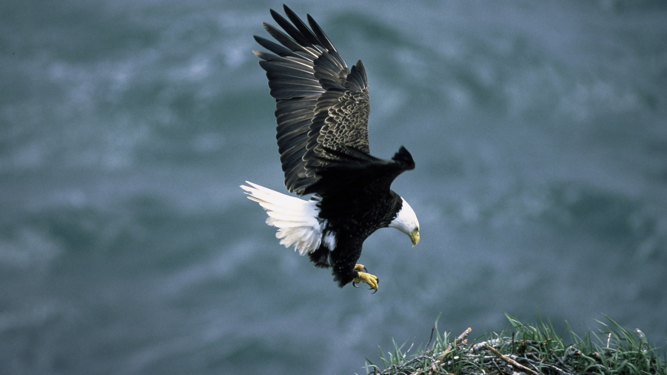Great Eagle Wallpapers  Eagle Wallpapers Hd