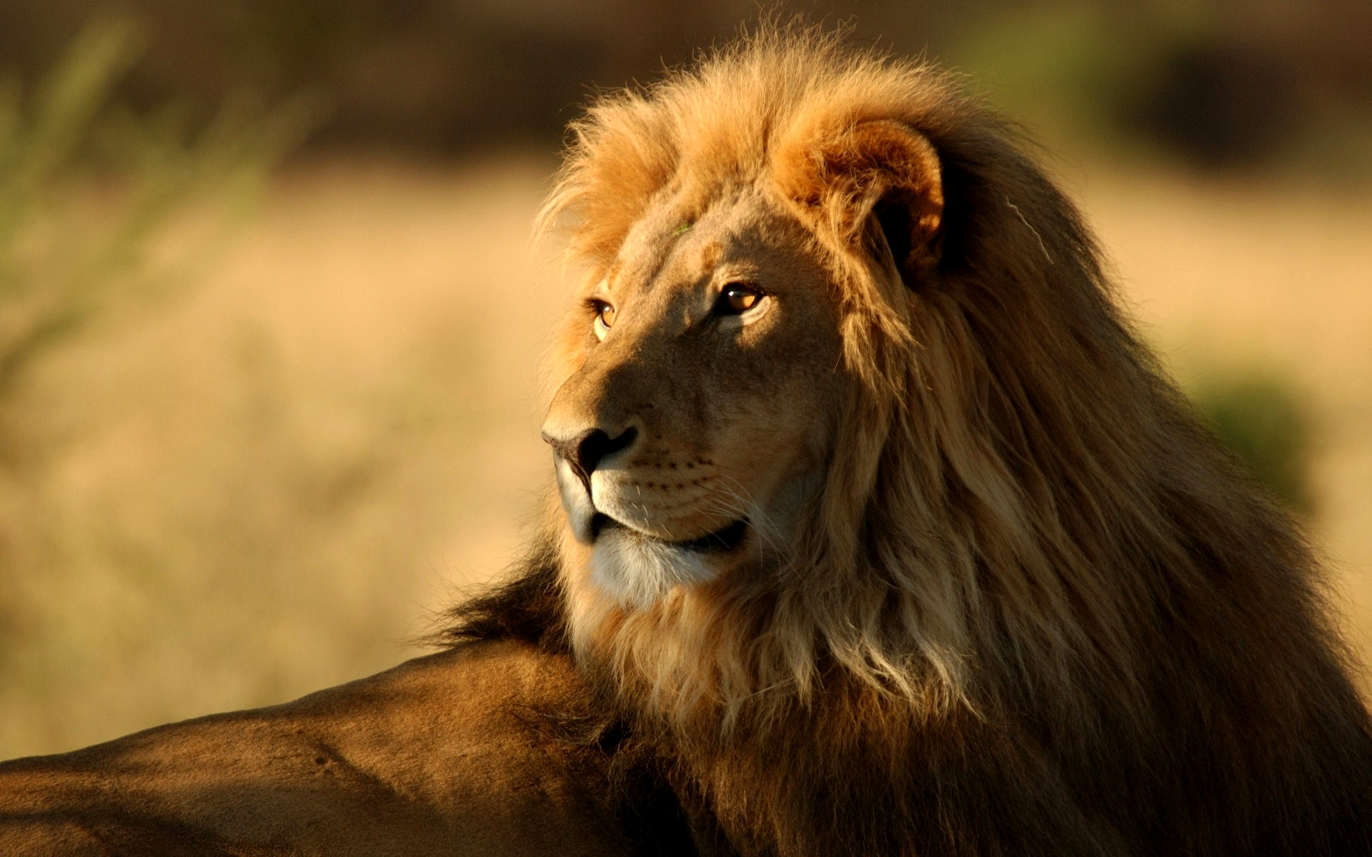 African Animals List With Pictures Facts Information