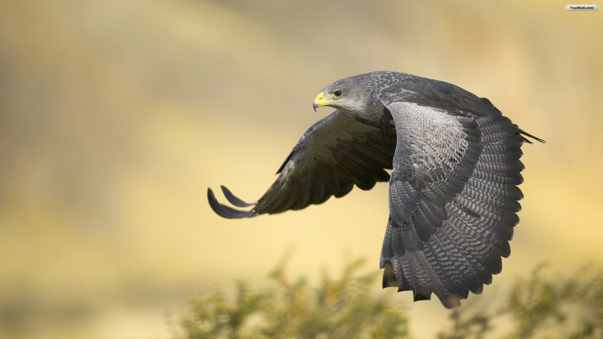 Falcon High Resolution Wallpapers: High Quality Falcon Wallpapers
