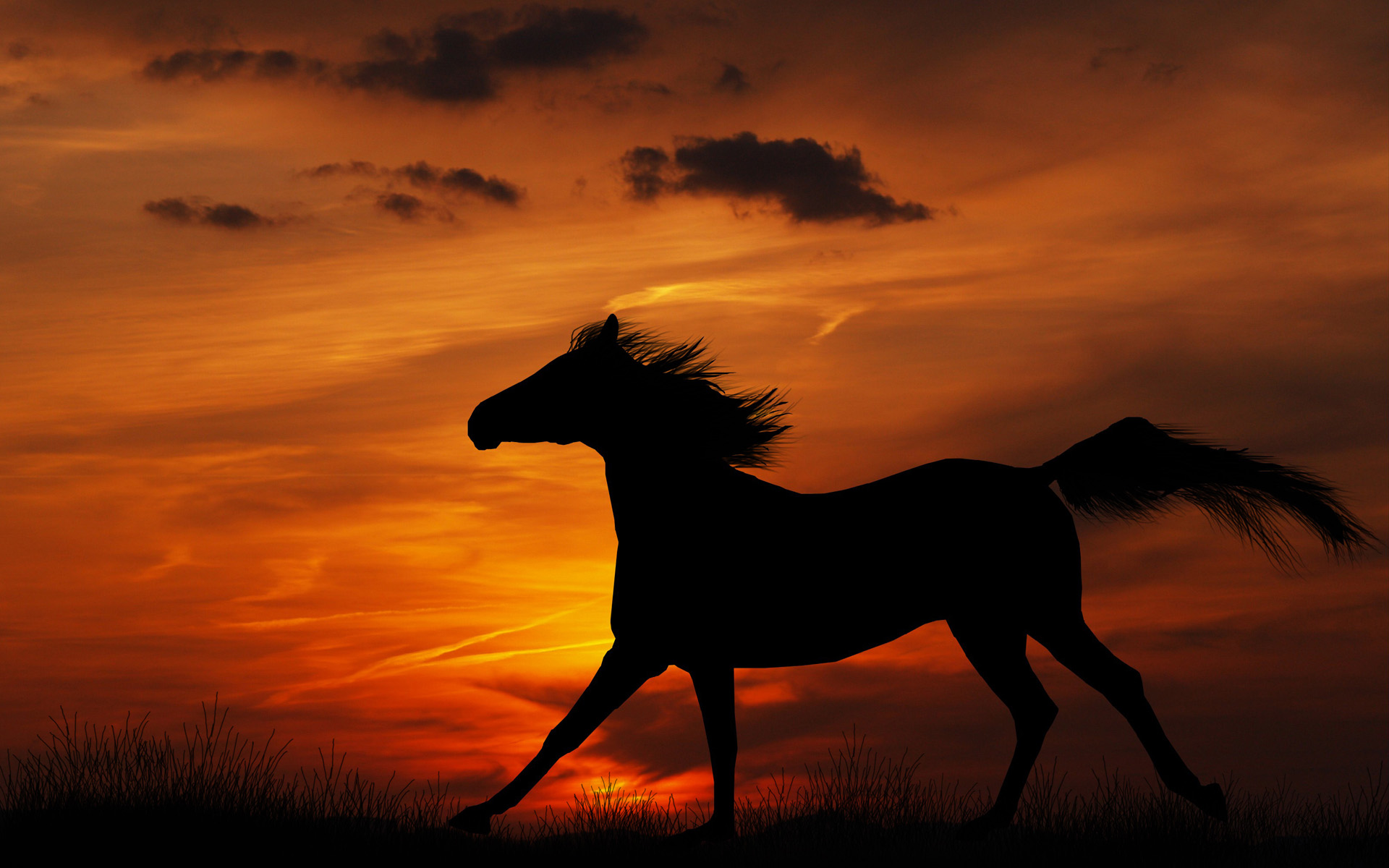 download wallpaper horses sunset - photo #10