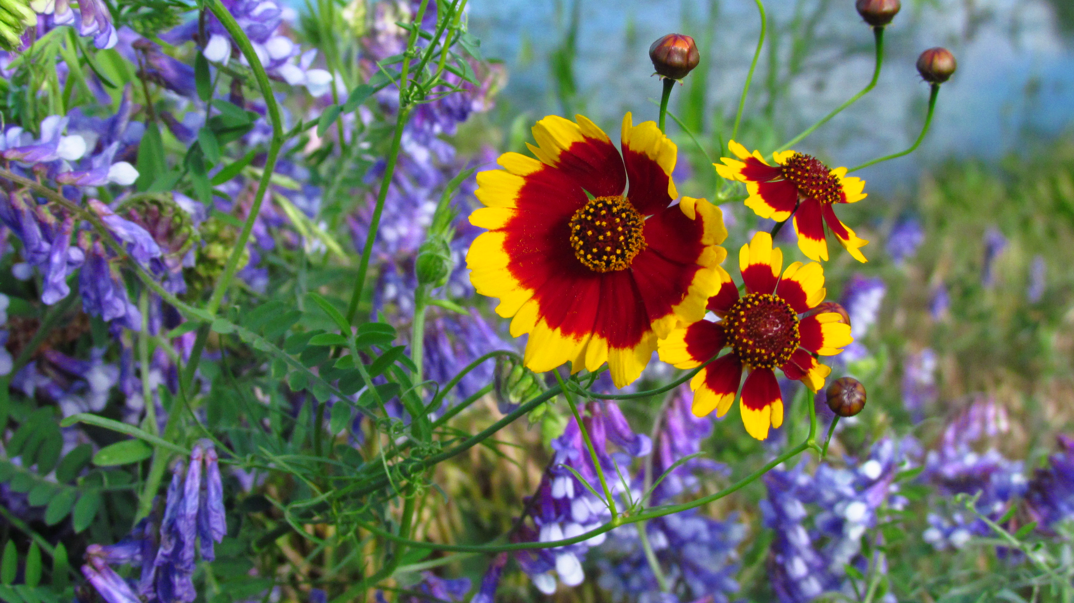 hd wildflowers wallpaper full hd pictures