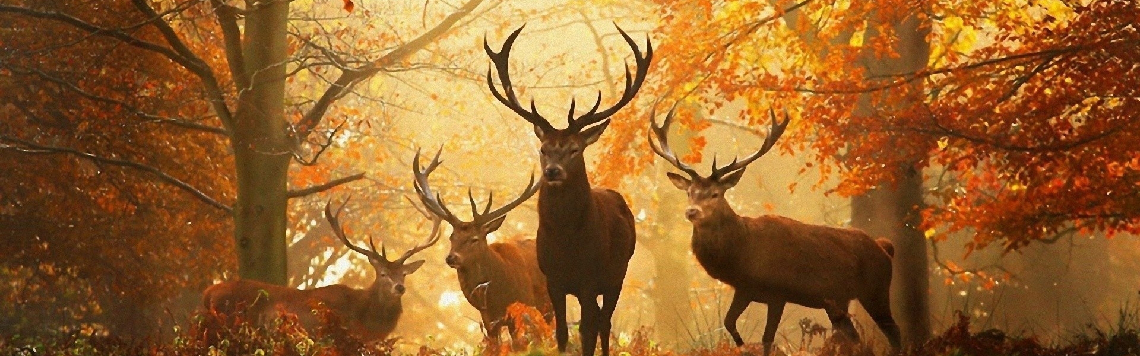 deer wallpaper for facebook full hd pictures