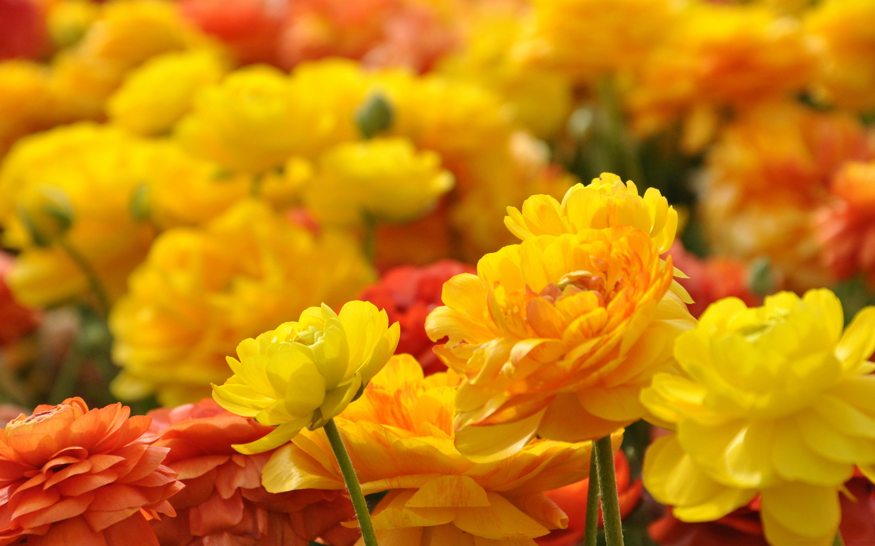 Images Of Yellow Flowers Wallpaper Hd Spacehero