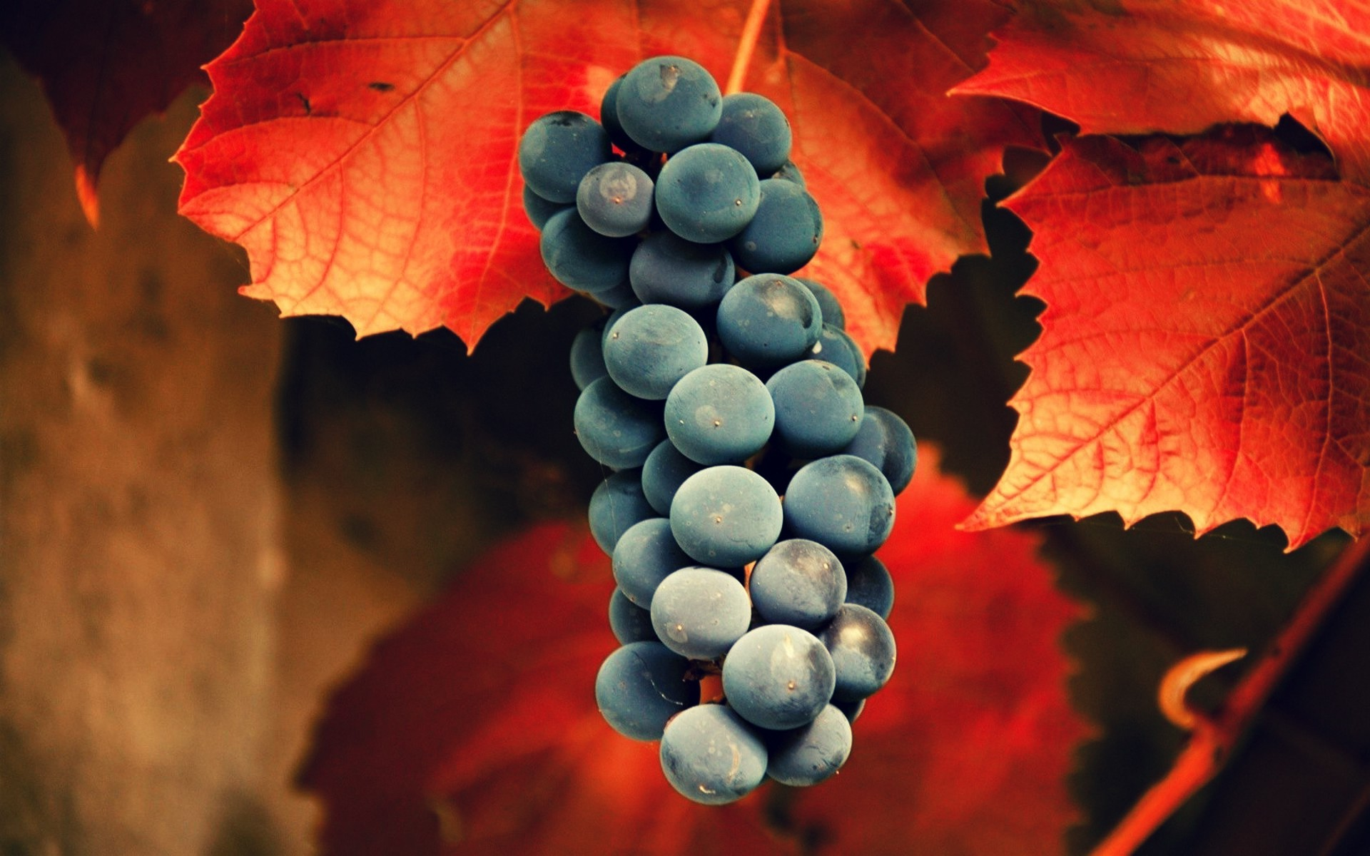 grapes wine hd wallpapers - photo #35