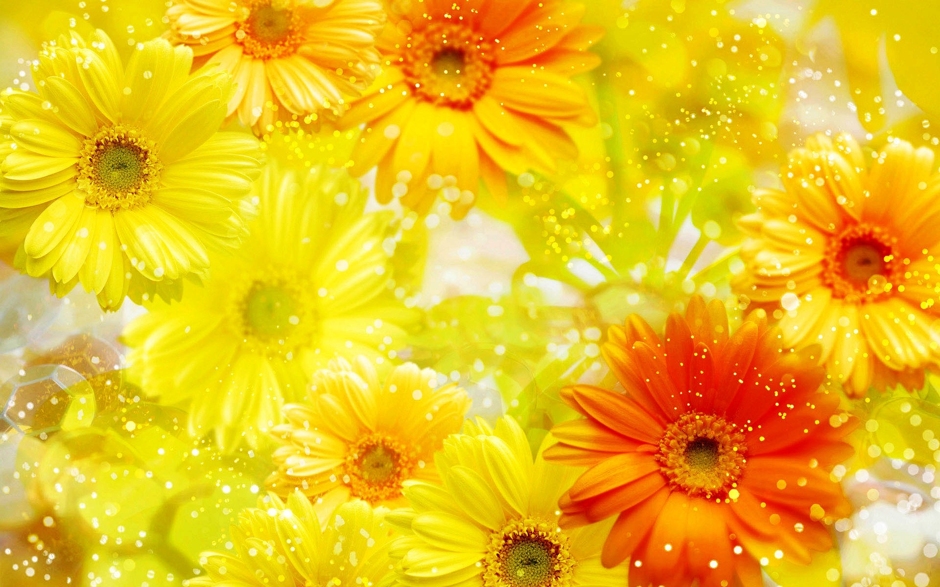 Hd wallpaper yellow flowers - Wallpaper Yellow Flowers Id 70881 Source This