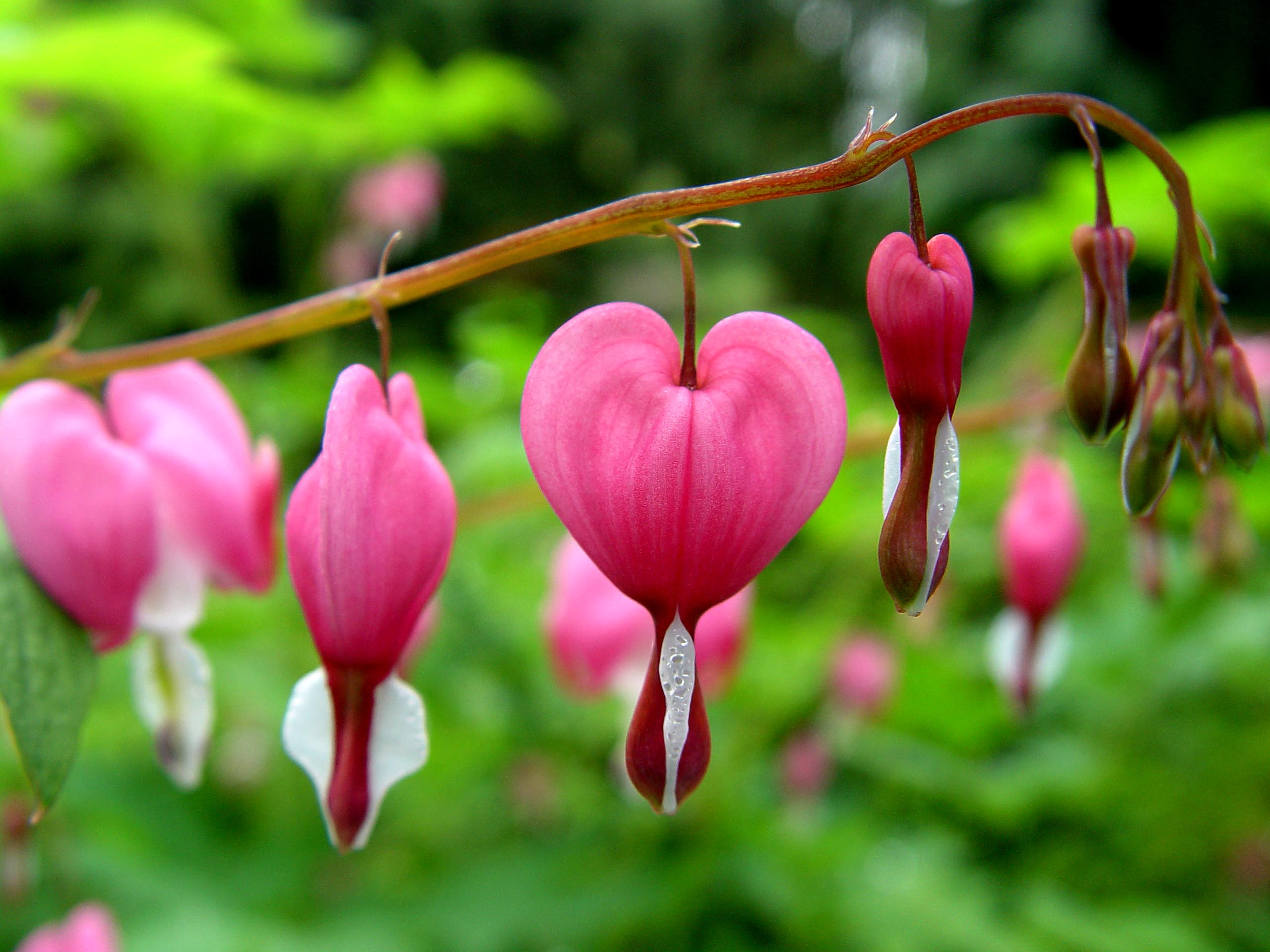 10 Most Beautiful Flowers In The World Top 10 Of The World