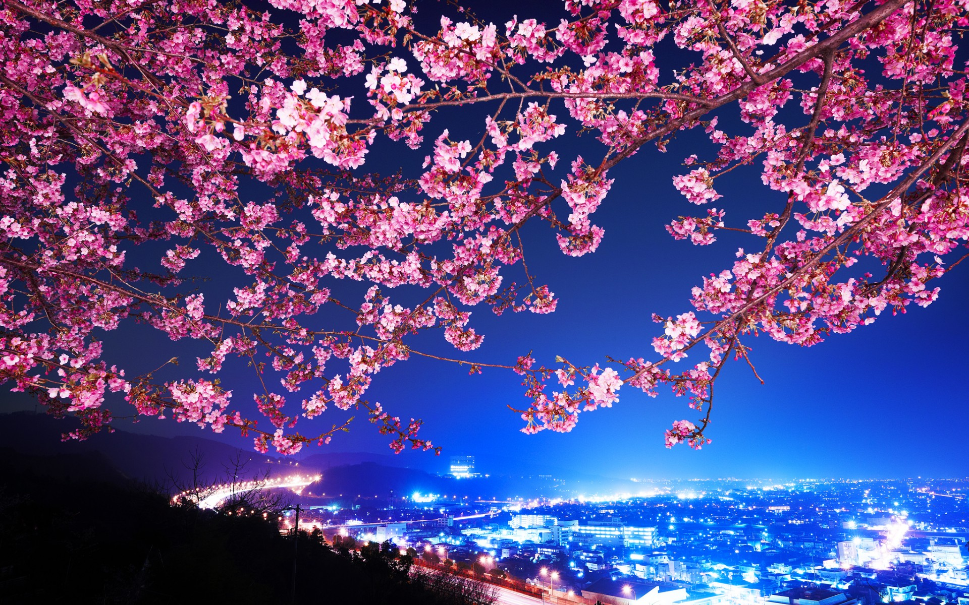 Pink Cherry Blossom Bird Stock Images RoyaltyFree Images