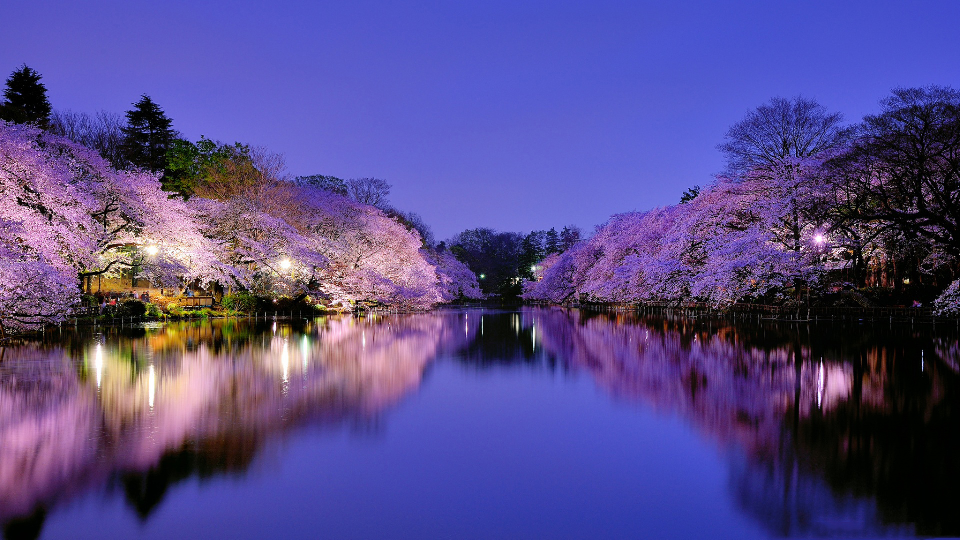 hd cherry blossom backgrounds - photo #23