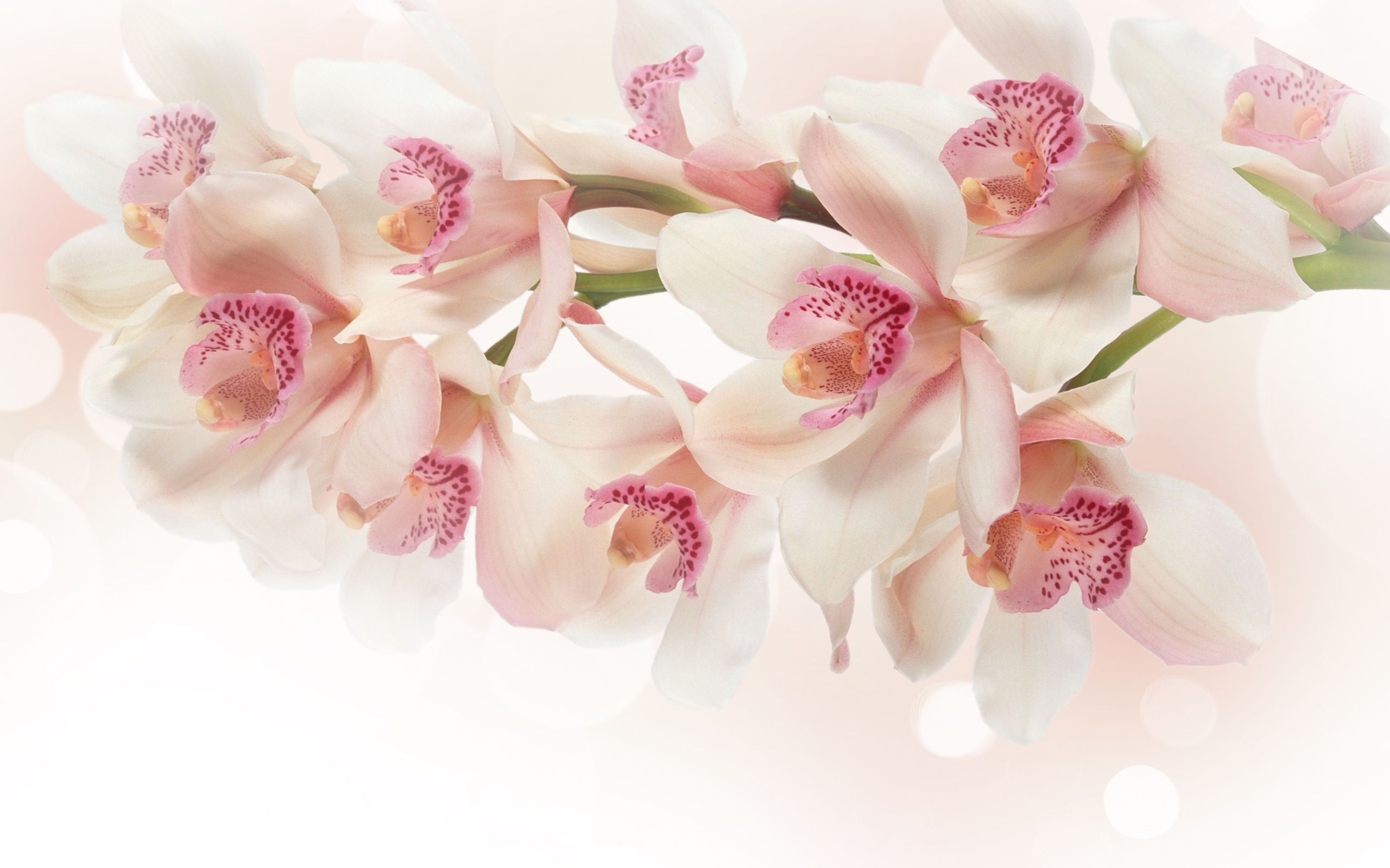 Orchid backgrounds full hd pictures