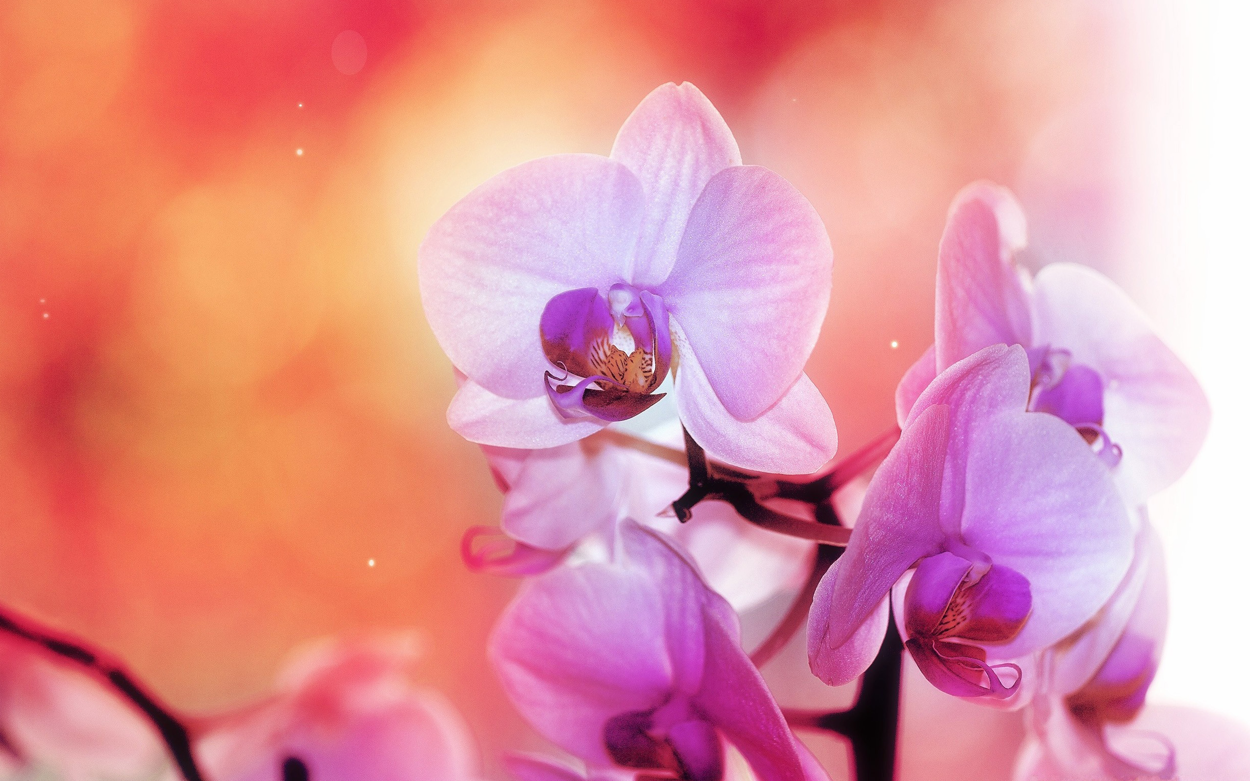 Habrumalas orchids in water wallpaper images - Orchid Wallpaper