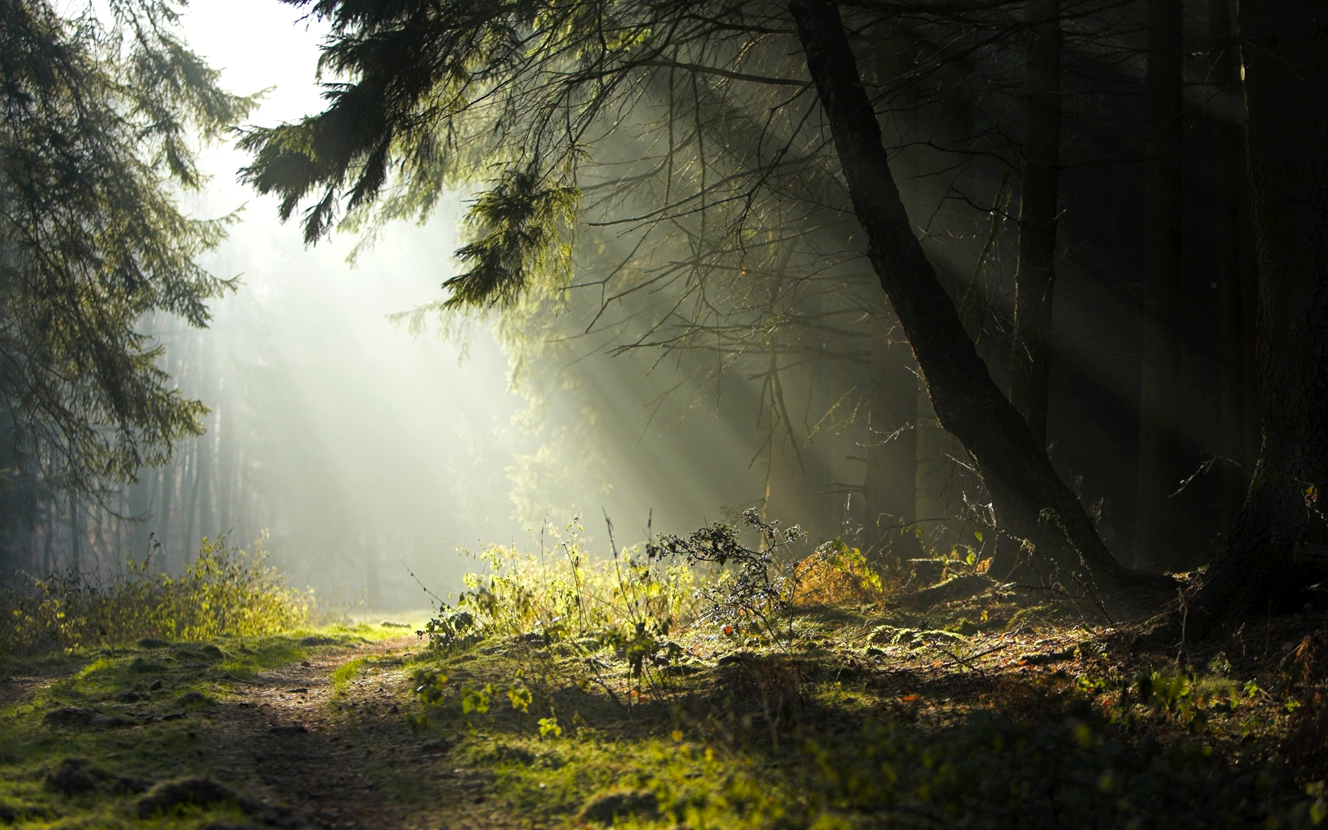 full-hd-forest-wallpapers