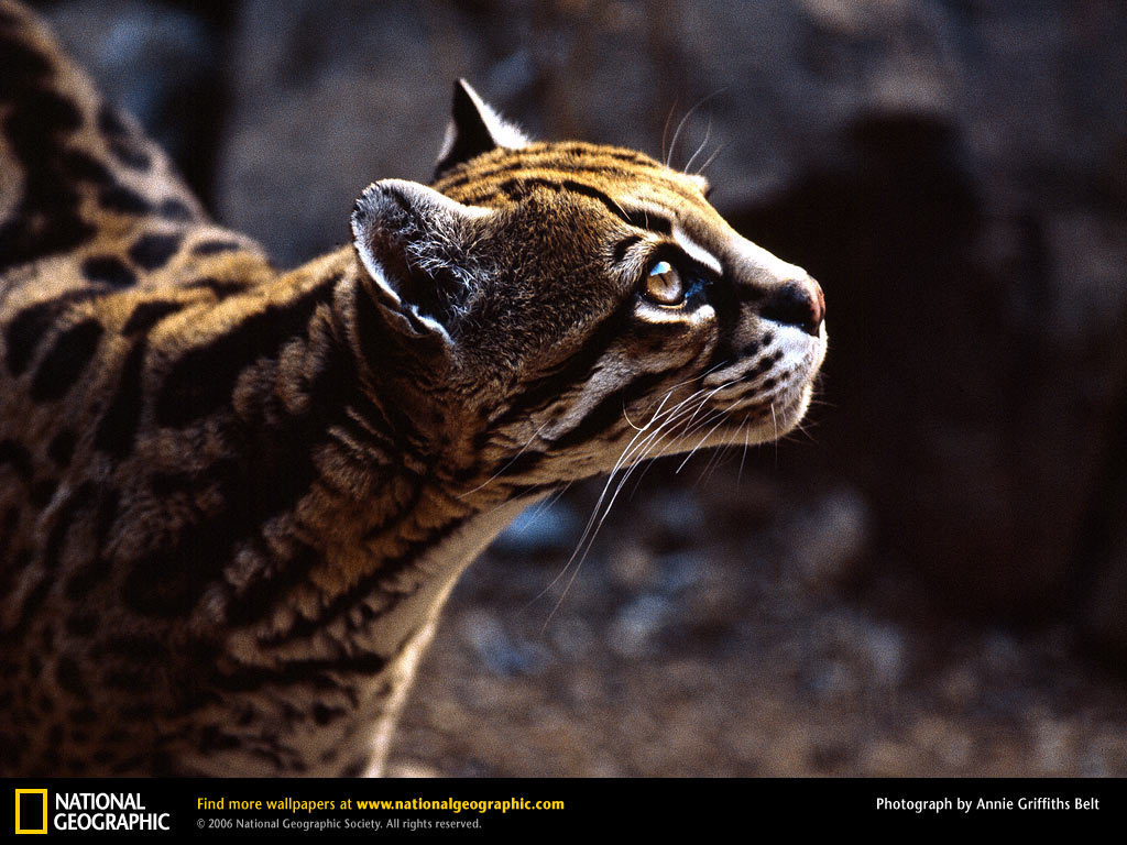 Amazing nat geo wild wallpaper full hd pictures - National geographic wild wallpapers ...