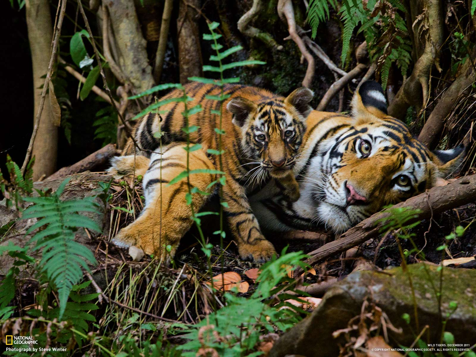 Nat geo wild hd wallpaper full hd pictures - National geographic wild wallpapers ...