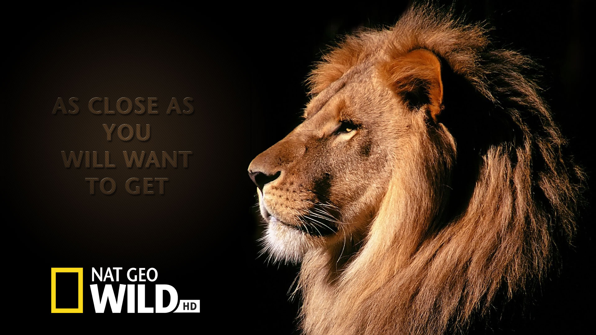 Nat geo wild wallpaper hd full hd pictures - National geographic wild wallpapers ...