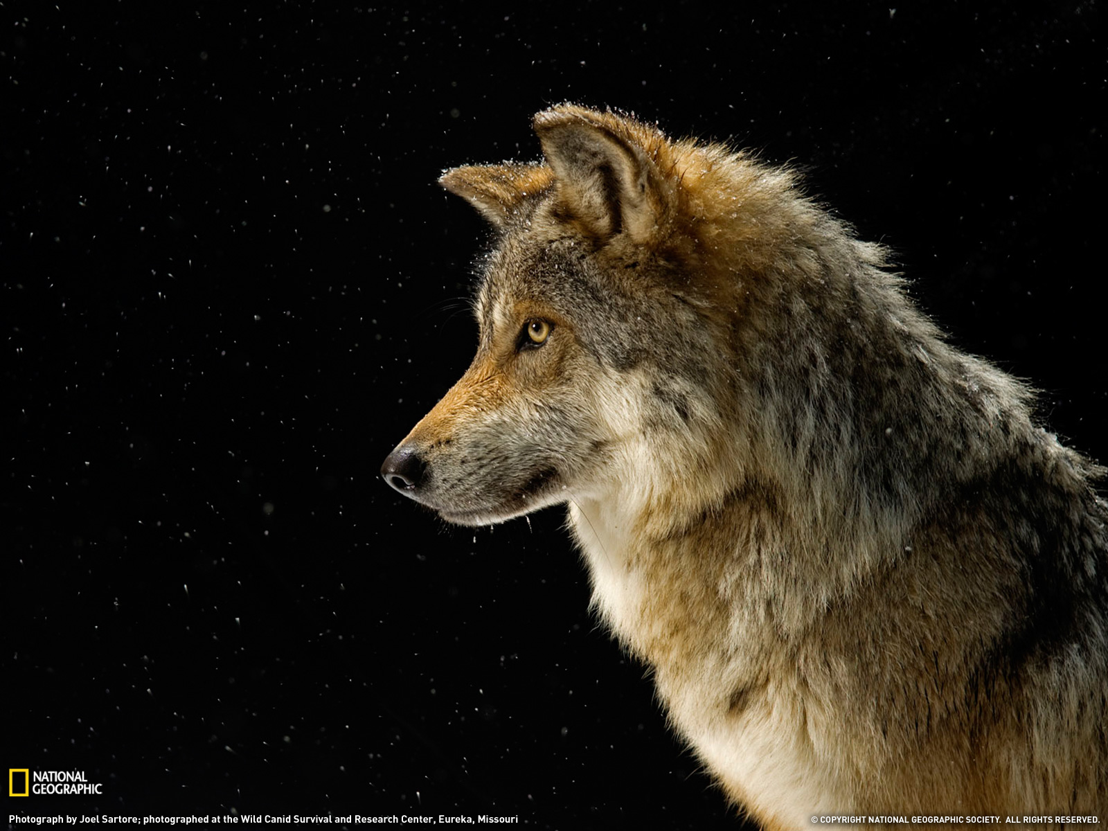 Nat geo wild wallpapers hd full hd pictures - National geographic wild wallpapers ...