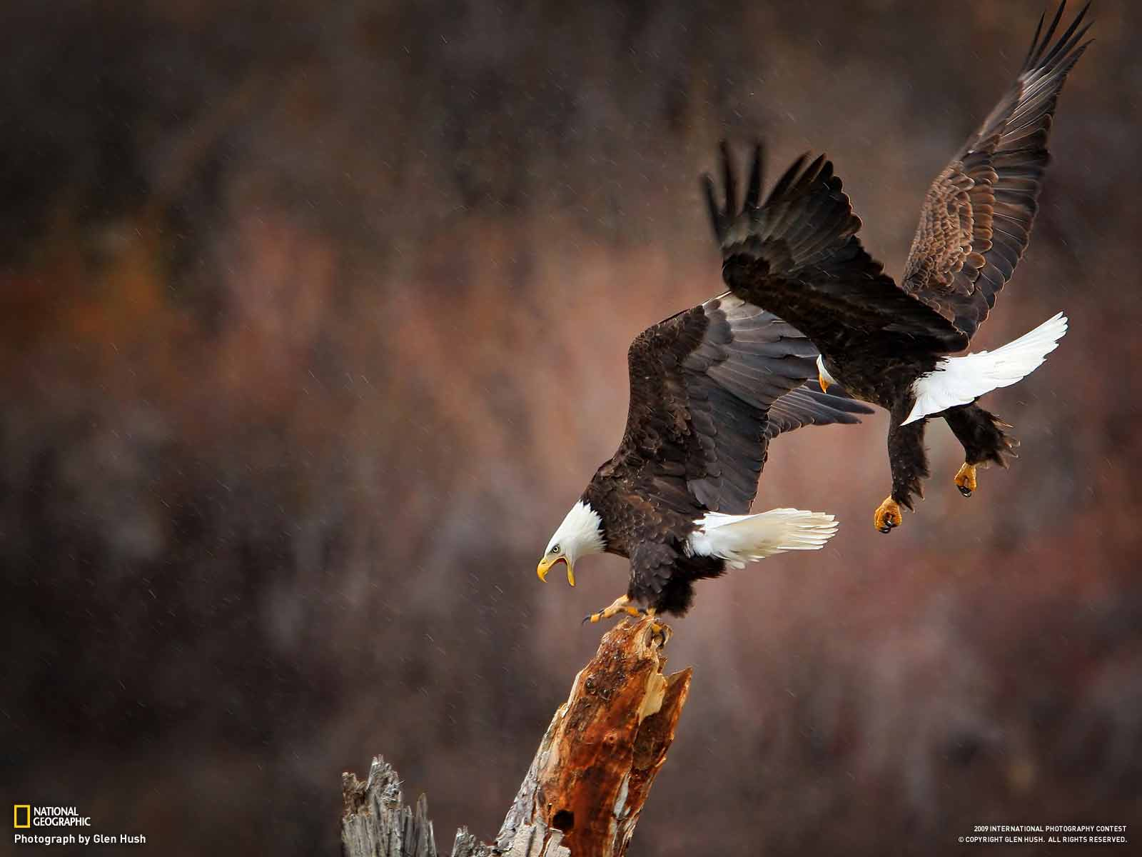 Special nat geo wild wallpaper full hd pictures - National geographic wild wallpapers ...
