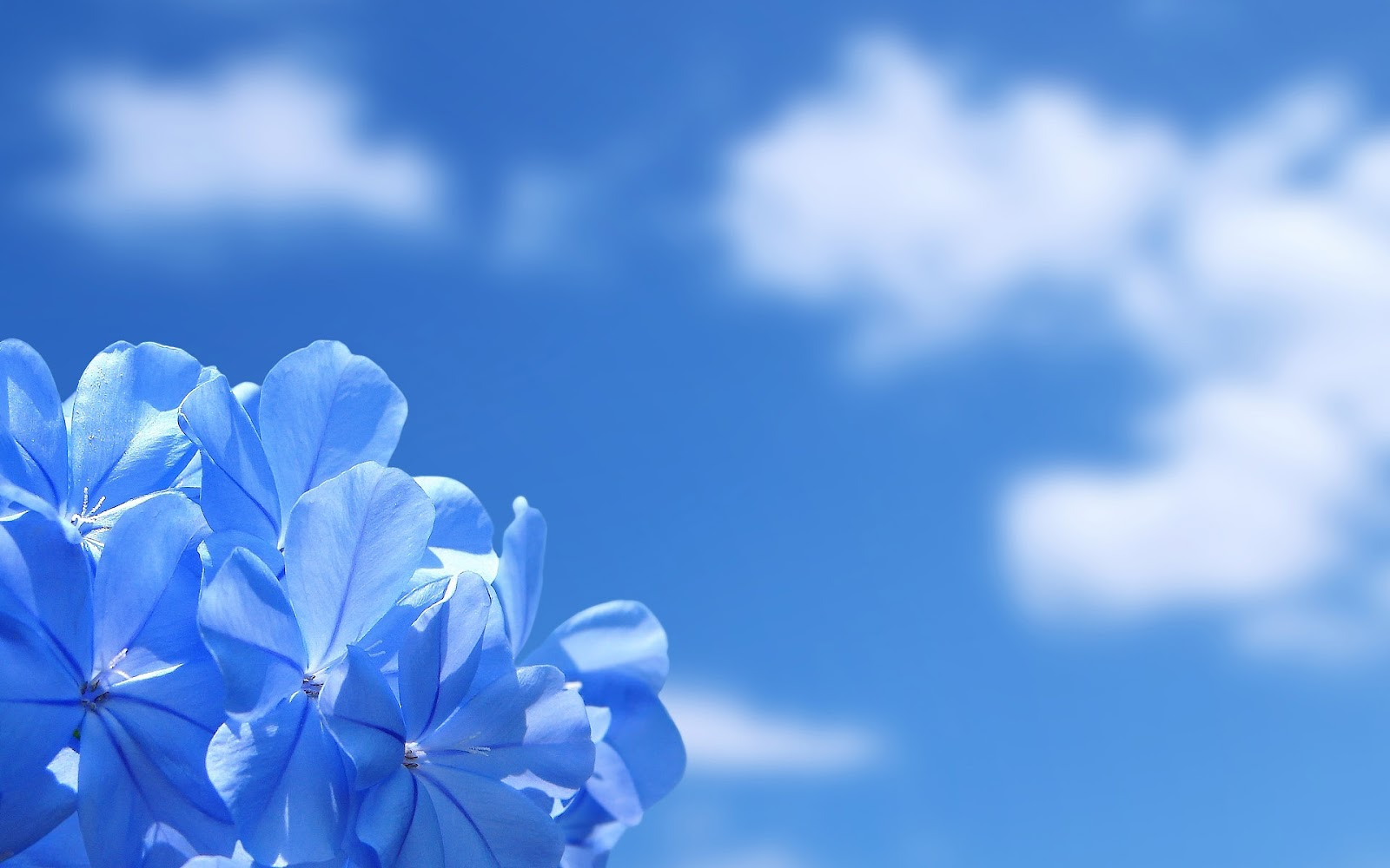 lovely blue flower wallpaper full hd pictures