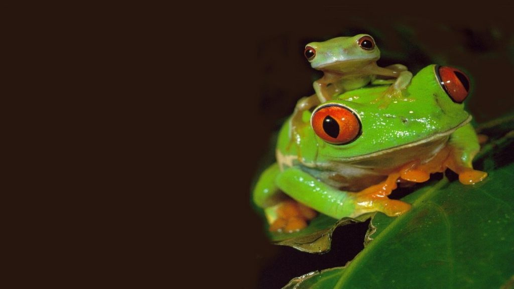Frog Hq Wallpapers Full Hd Pictures HD Wallpapers Download Free Images Wallpaper [1000image.com]