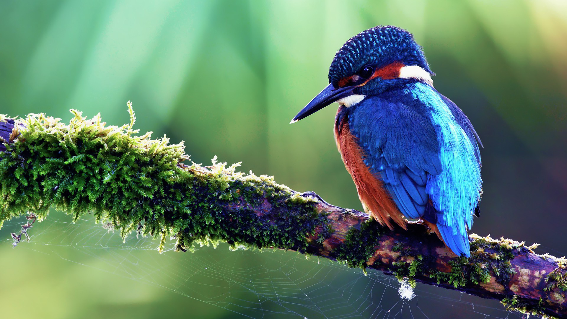 Colorful Bird Wallpapers