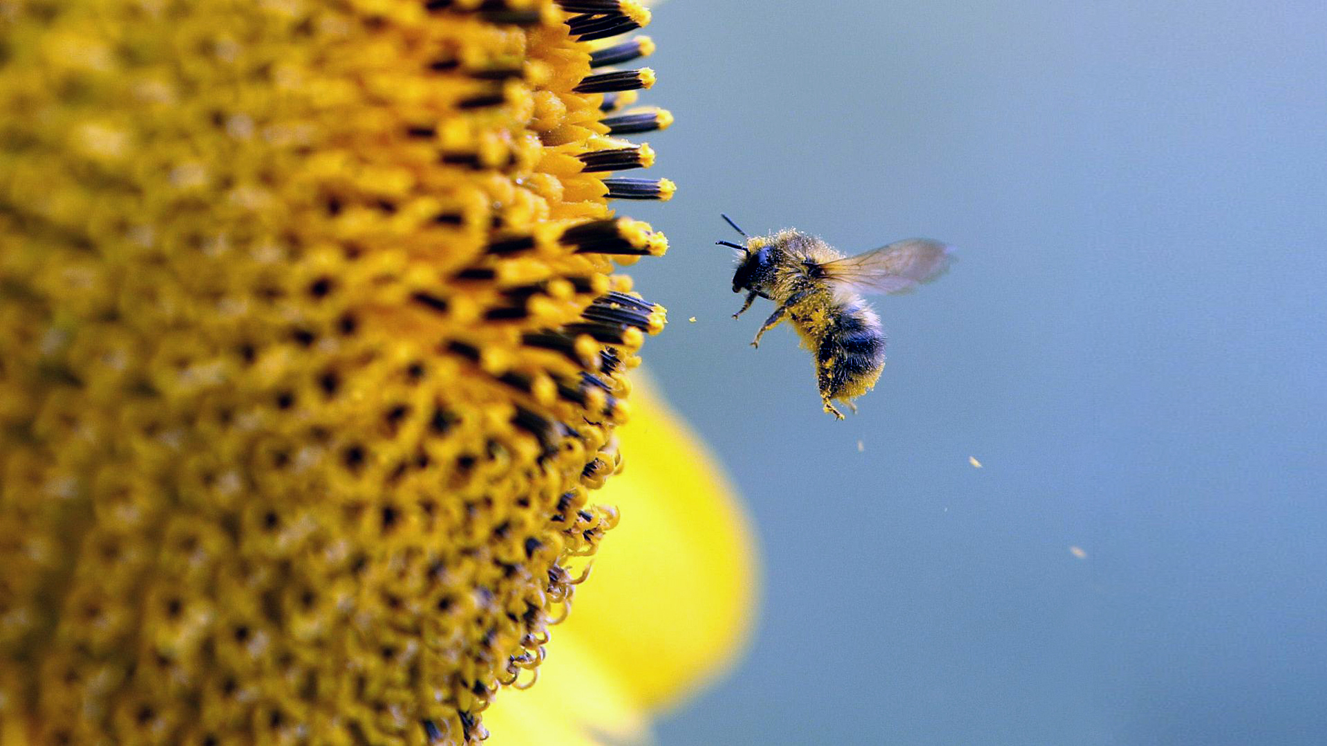 beehive wallpapers - photo #42
