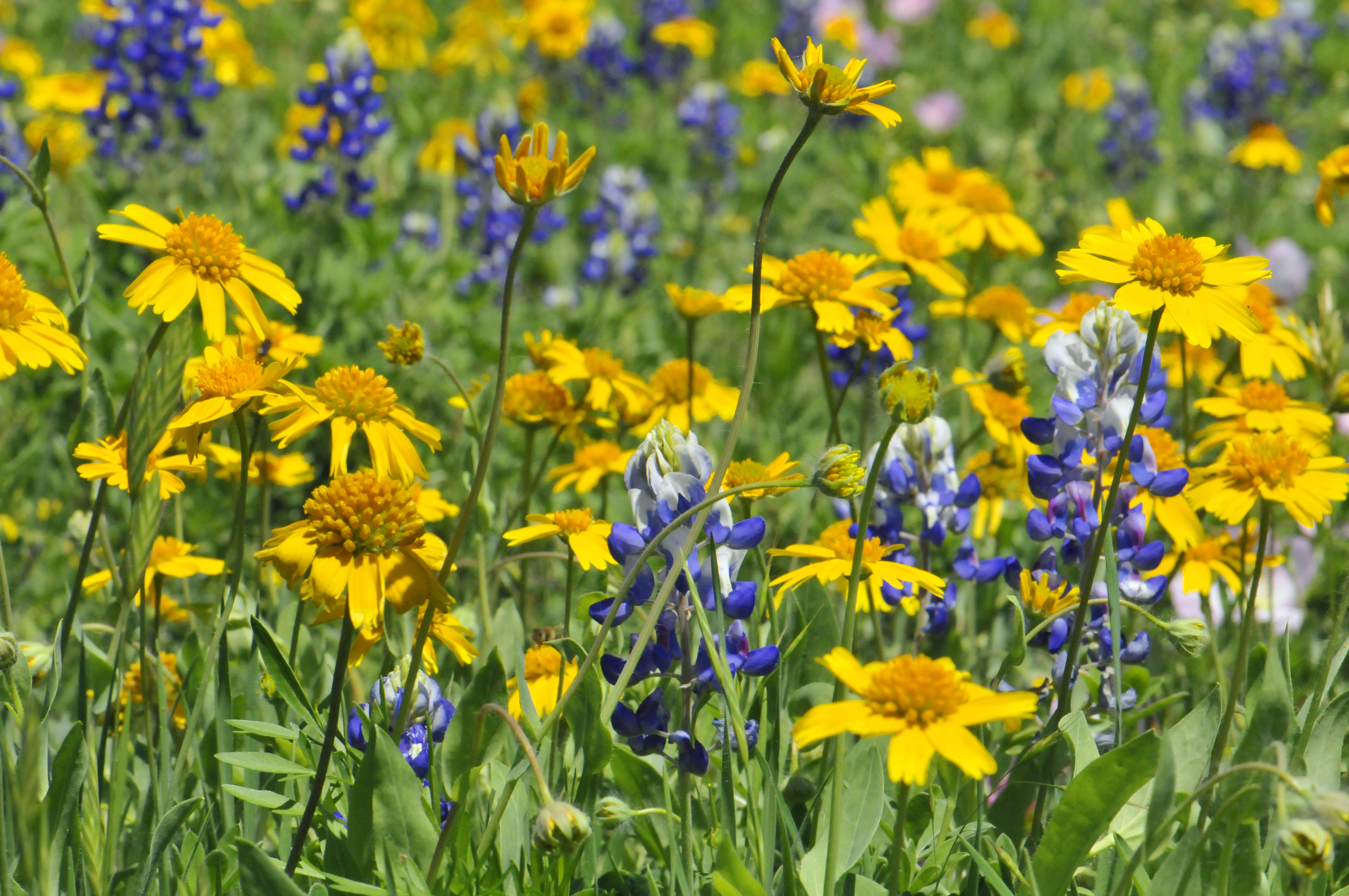 Full Hd Wildflowers Wallpaper Full Hd Pictures