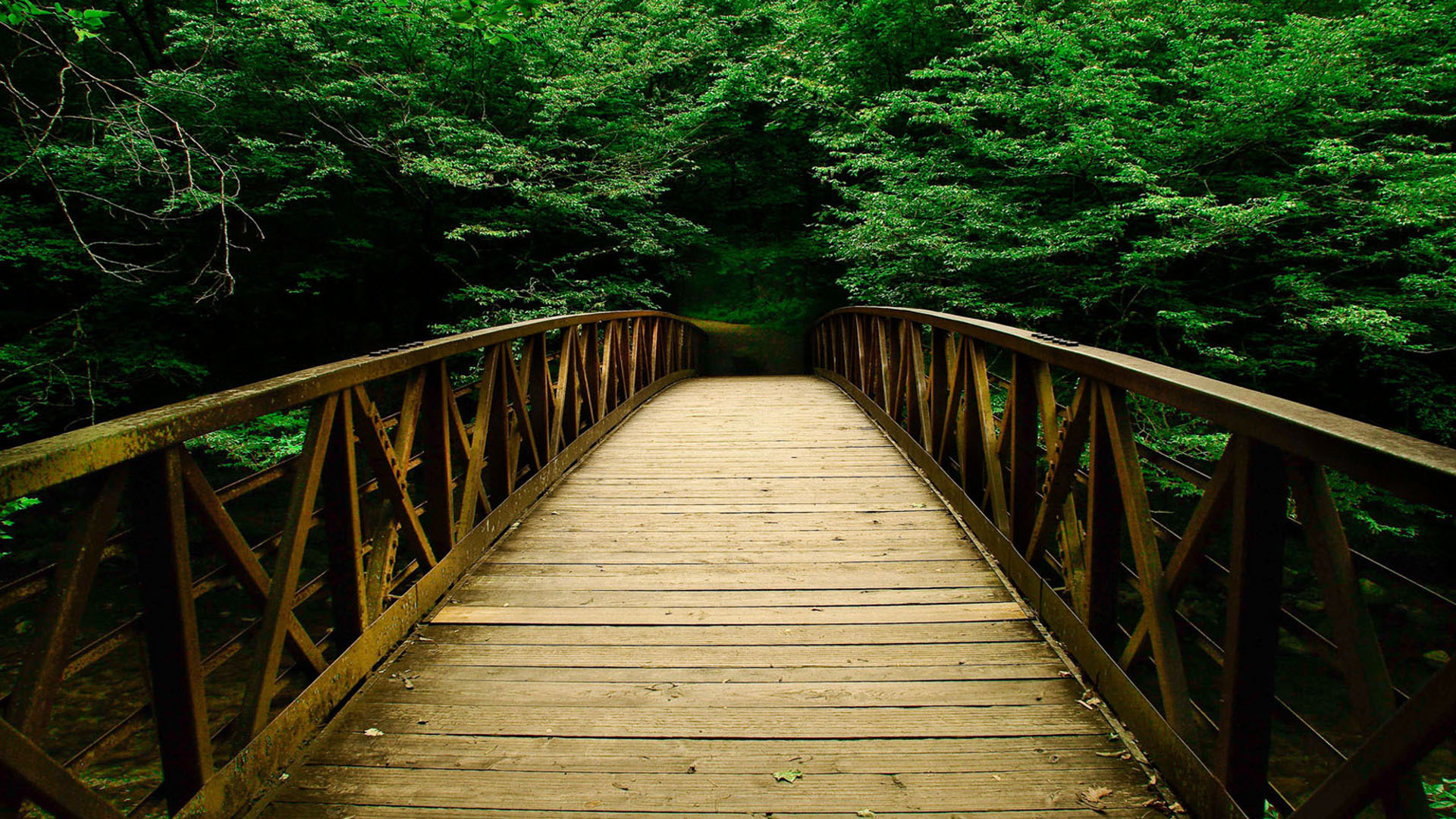 Most beautiful wooden pathway wallpaper full hd pictures for Most beautiful wood