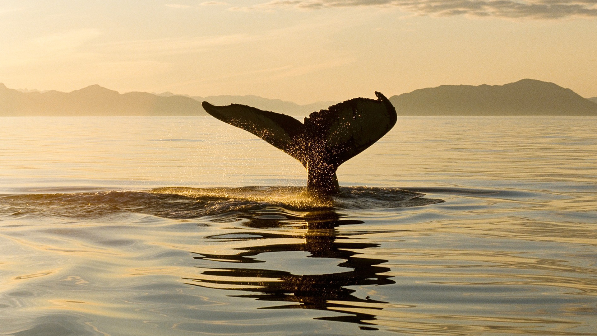 HD Whale Wallpaper | Full HD Pictures