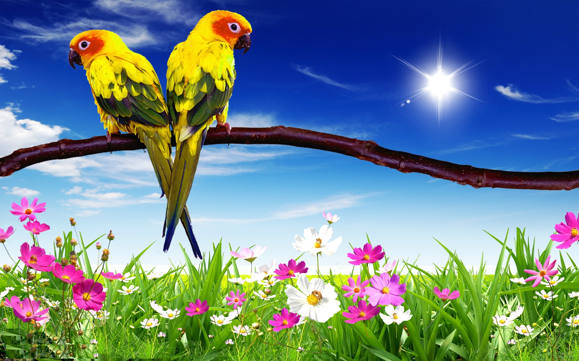 parrot backgrounds full hd pictures