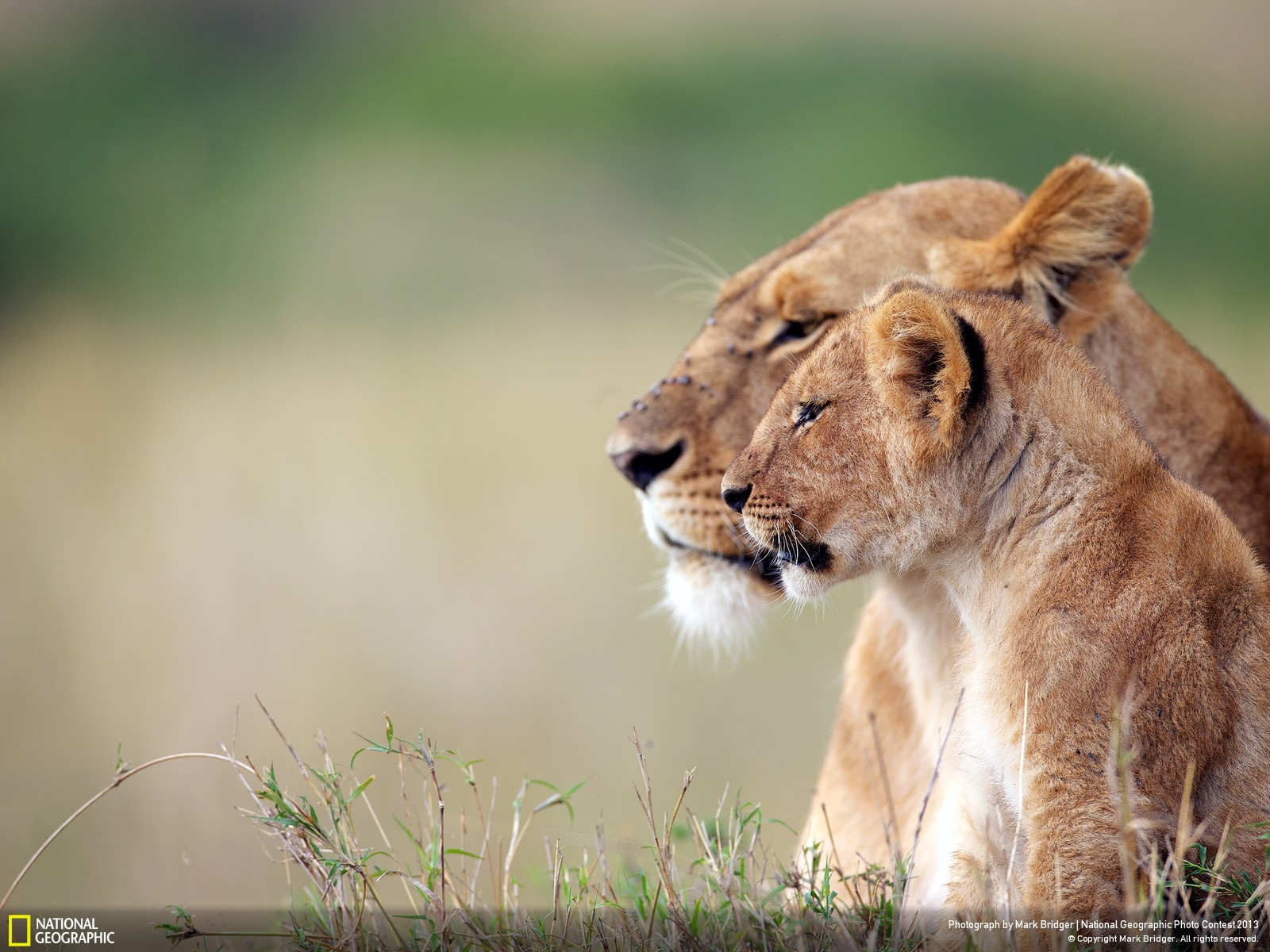 Magnificent nat geo wild wallpaper full hd pictures - National geographic wild wallpapers ...