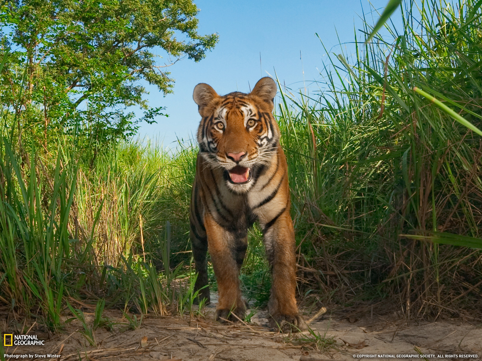 Nat geo wild hd wallpapers full hd pictures - National geographic wild wallpapers ...