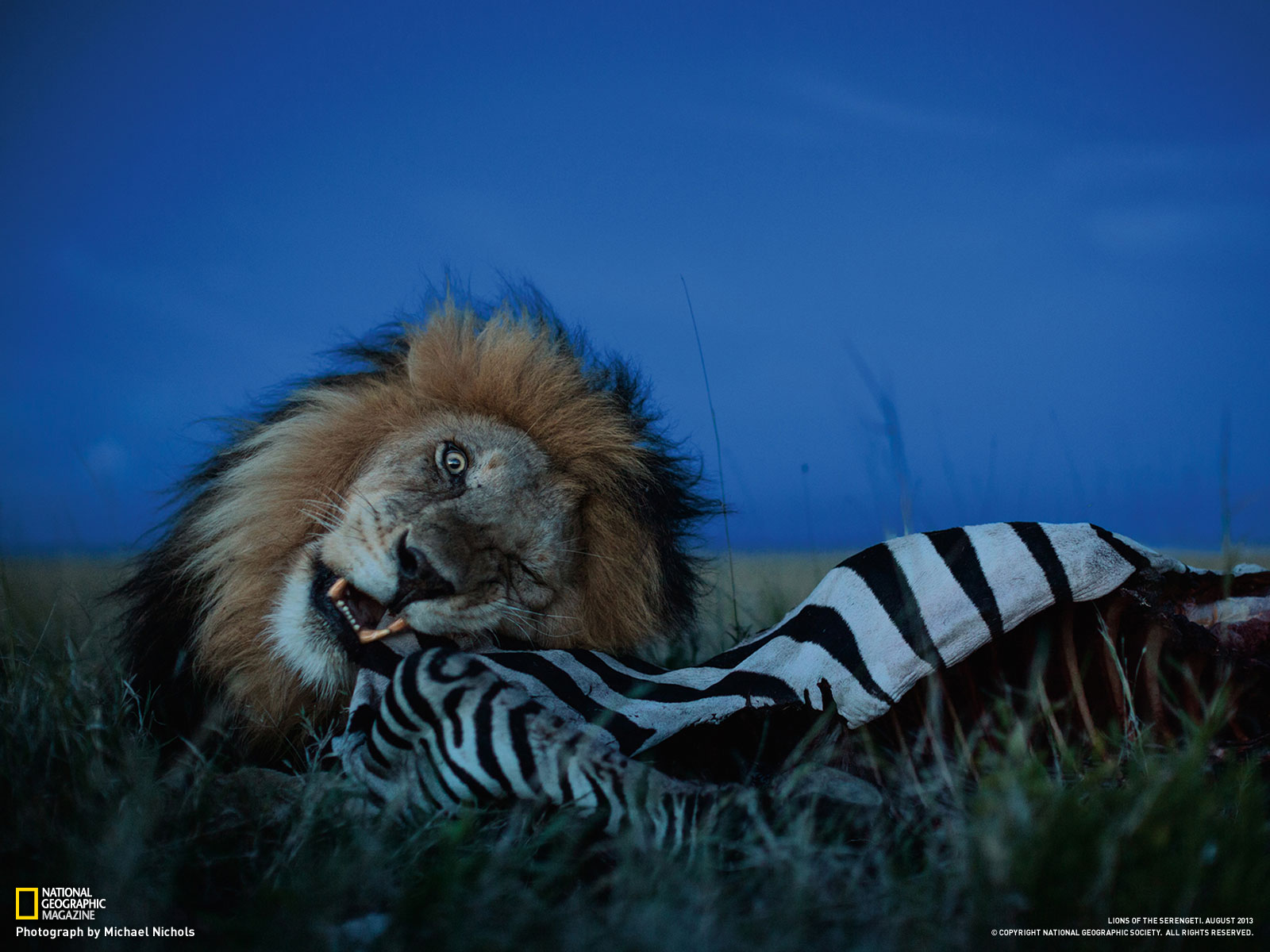 Wonderful nat geo wild wallpaper full hd pictures - National geographic wild wallpapers ...