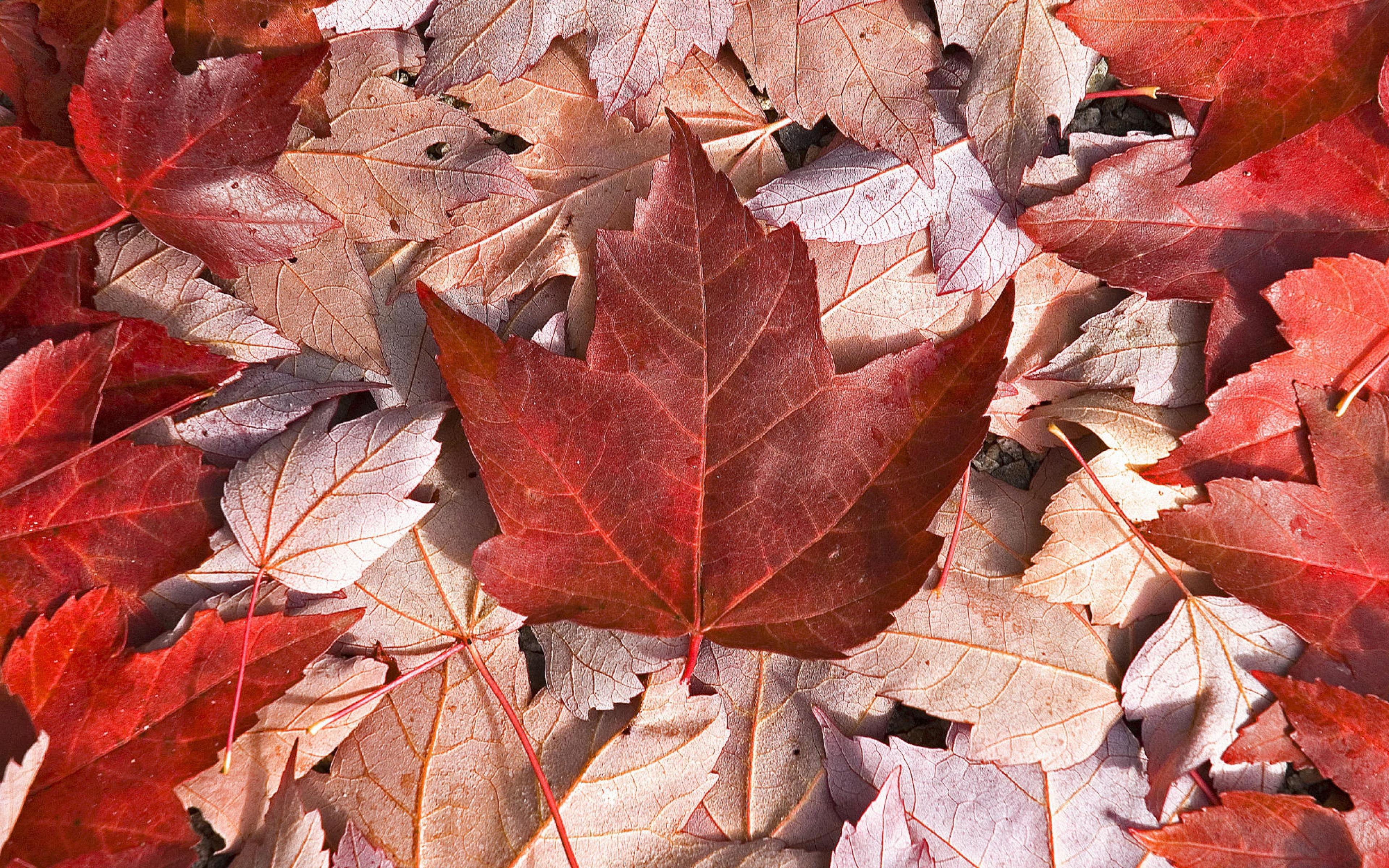 Full Hd Canada Wallpapers Full Hd Pictures