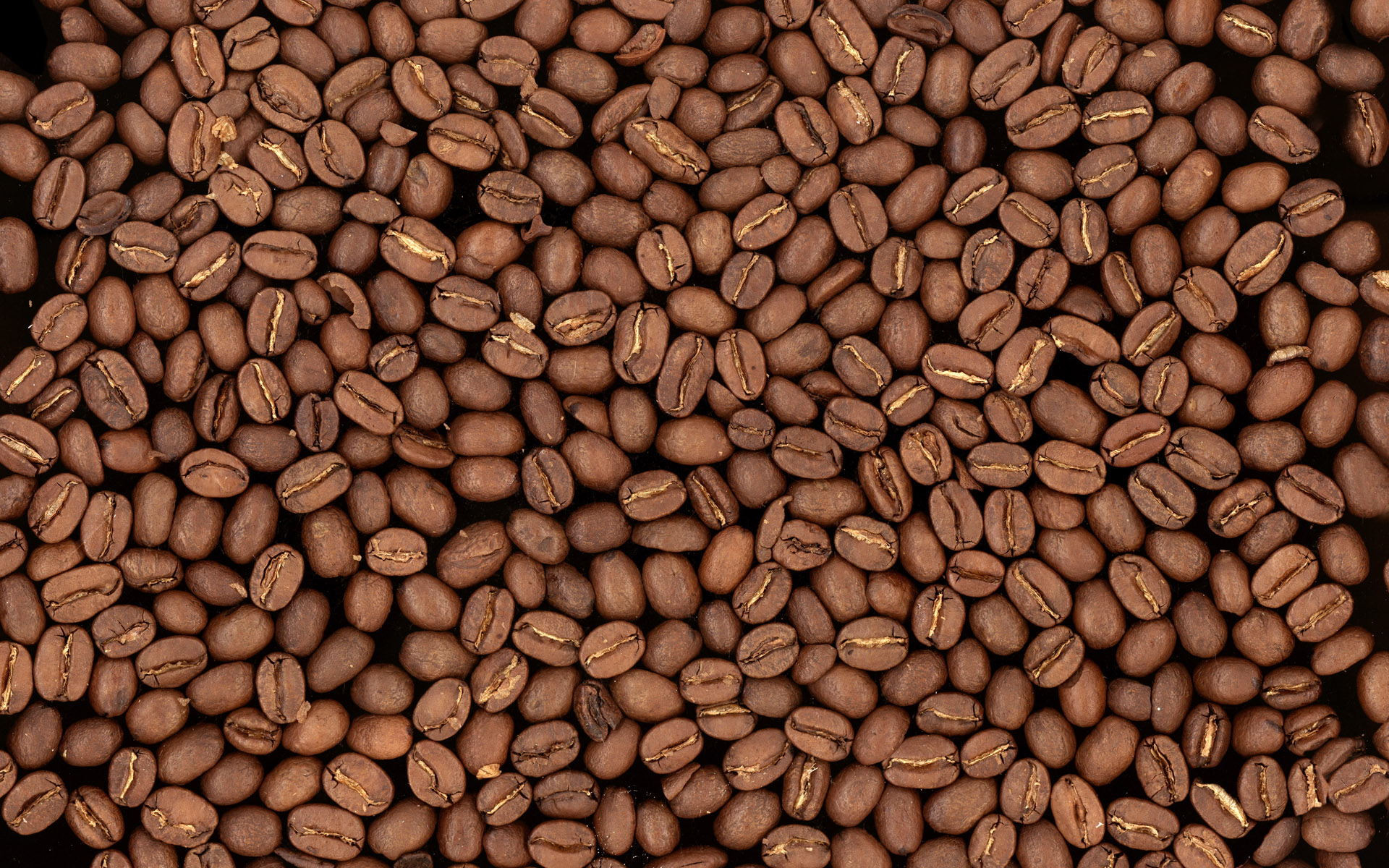 the magnificent world of coffee essay Evolution of coffee culture in united states print reference this  disclaimer: this essay has been submitted by a student this is not an example of the work written by our professional.