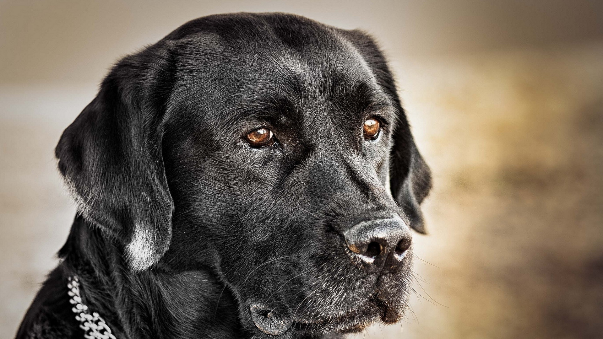 HD Black Dog Wallpapers | Full HD Pictures