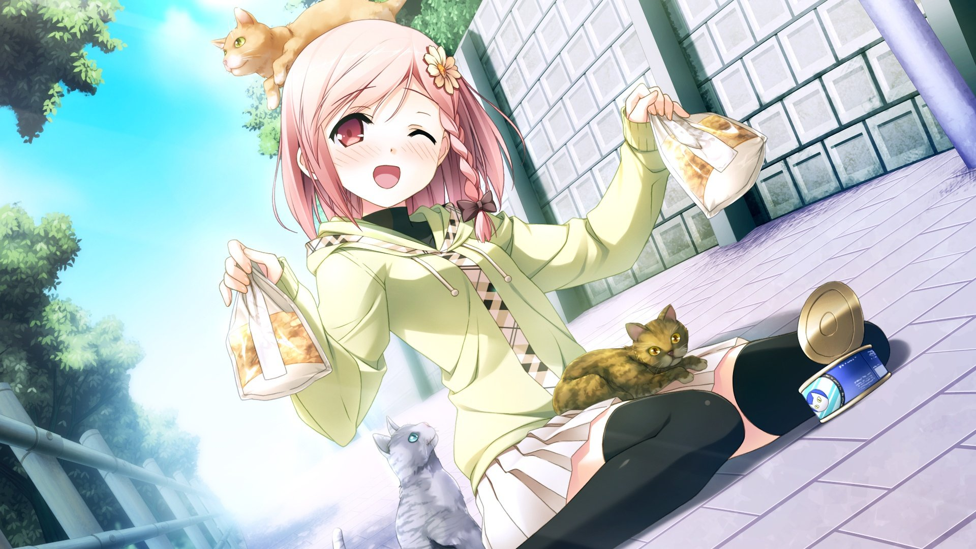 Anime Cat Girl Hd Wallpaper Full Hd Pictures
