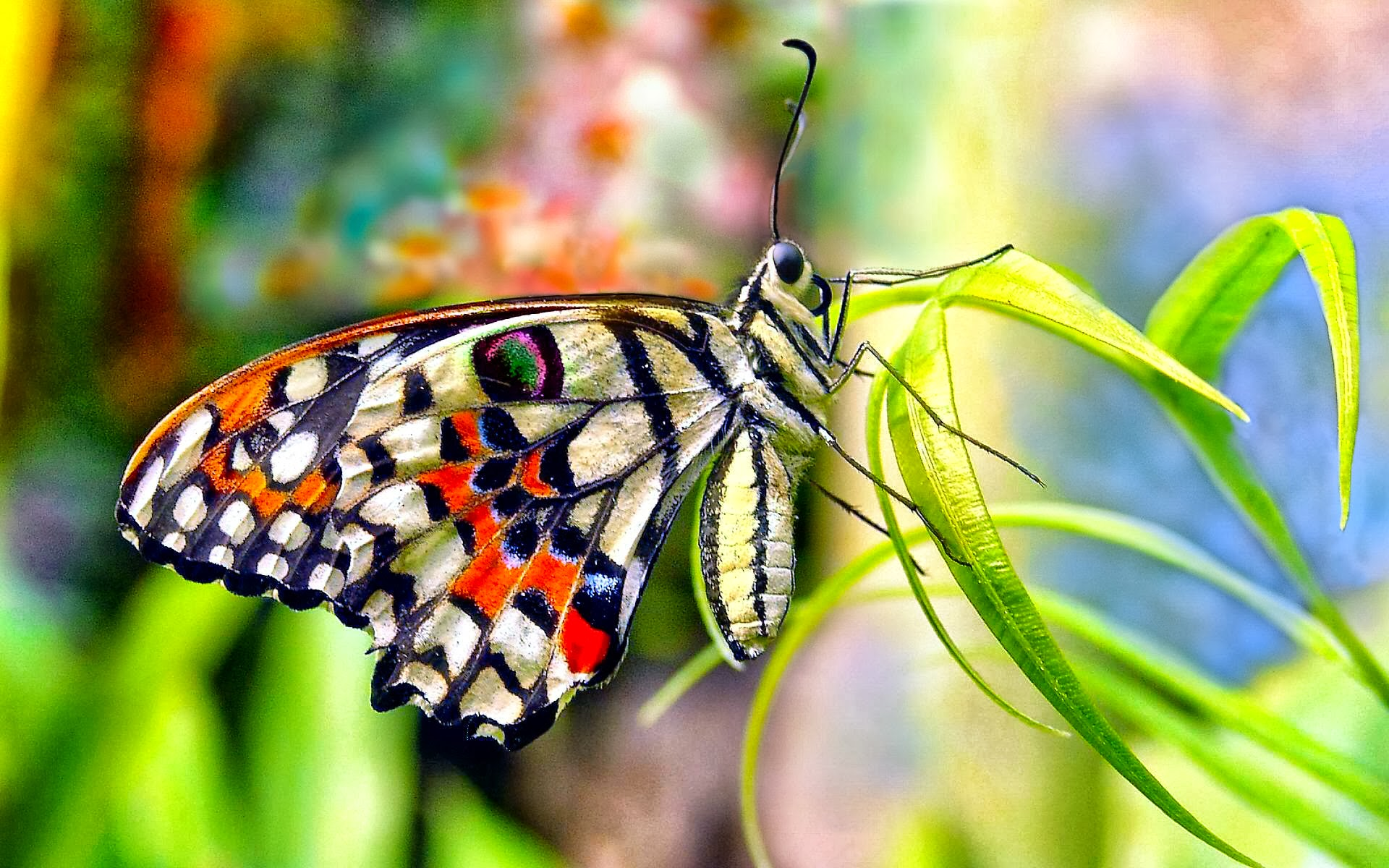 Butterfly Wallpapers HD | Full HD Pictures