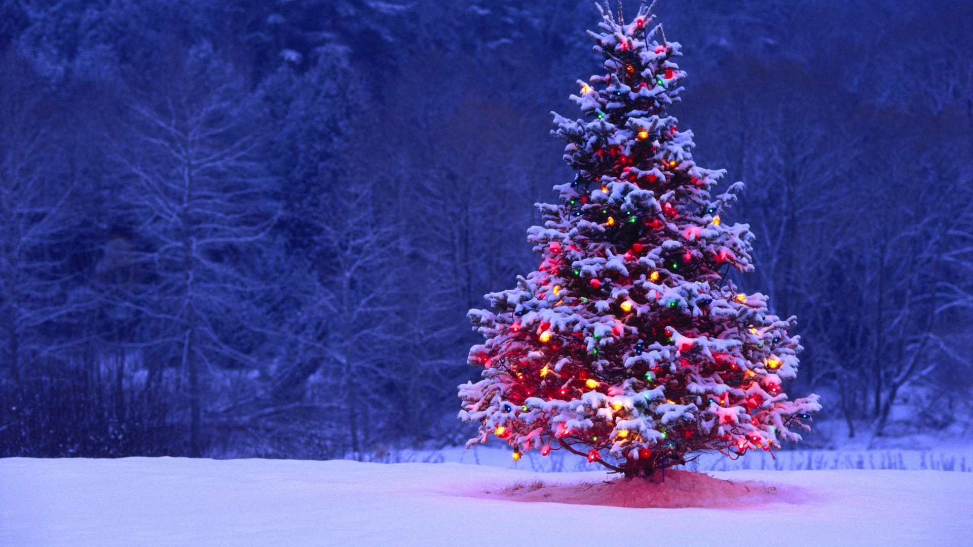 Christmas Landscape   Full HD Pictures