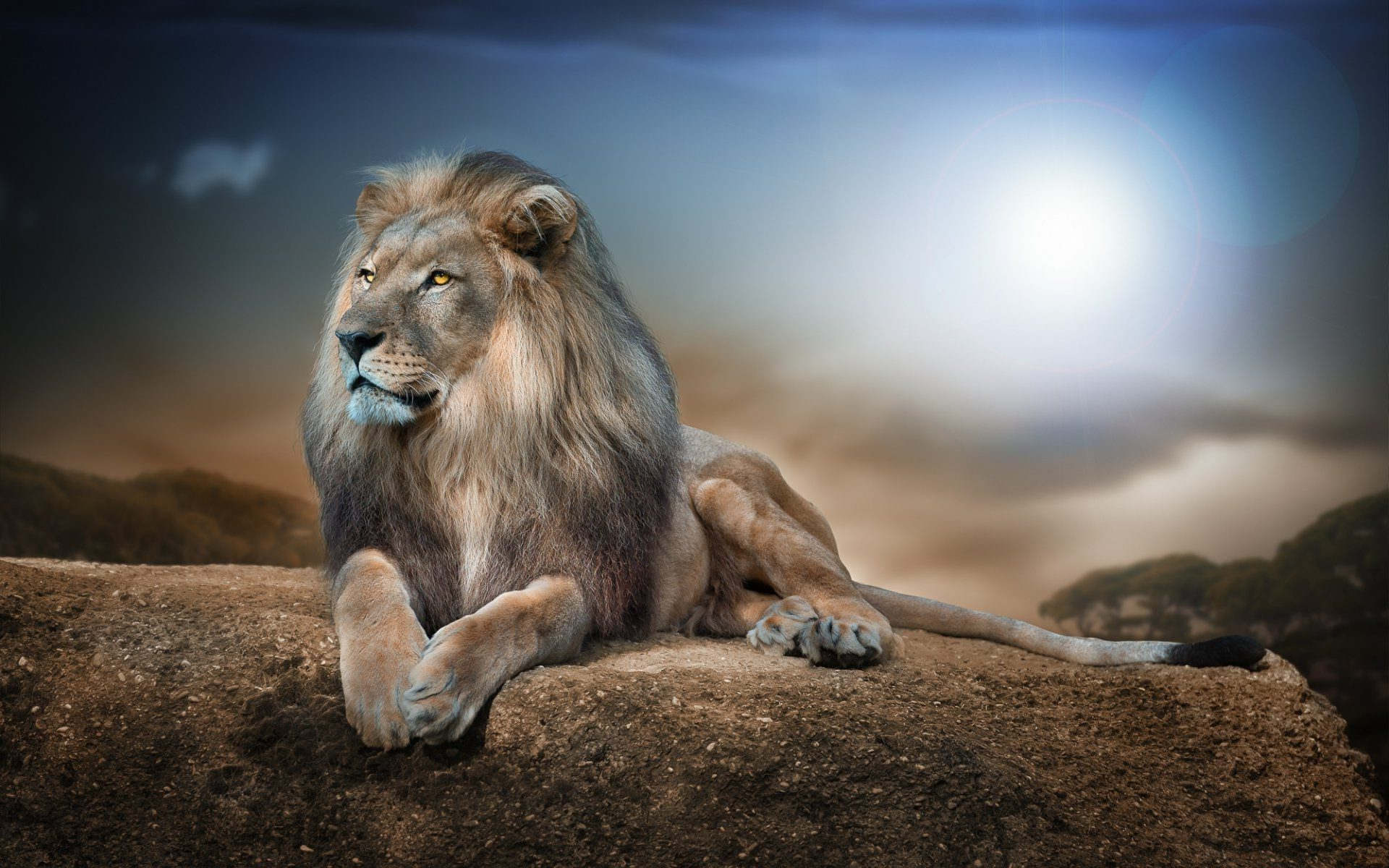 Lion Wallpapers 4k Hd Full Hd Pictures
