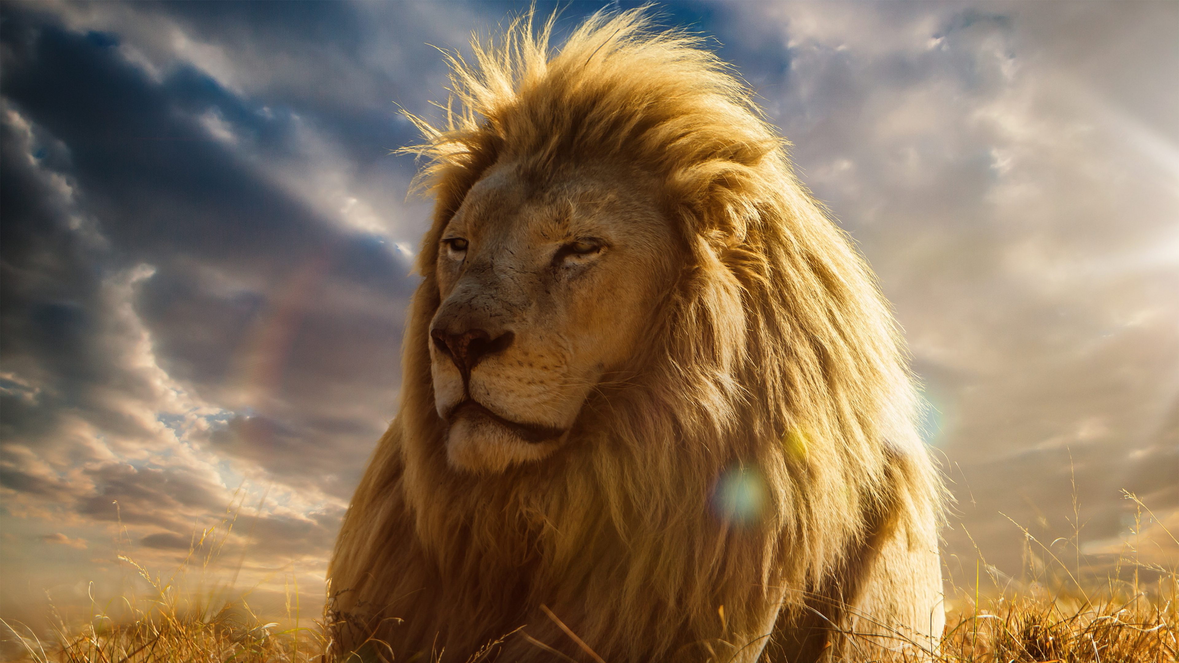 Lion wallpapers 4k full hd pictures - Lion 4k wallpaper for mobile ...