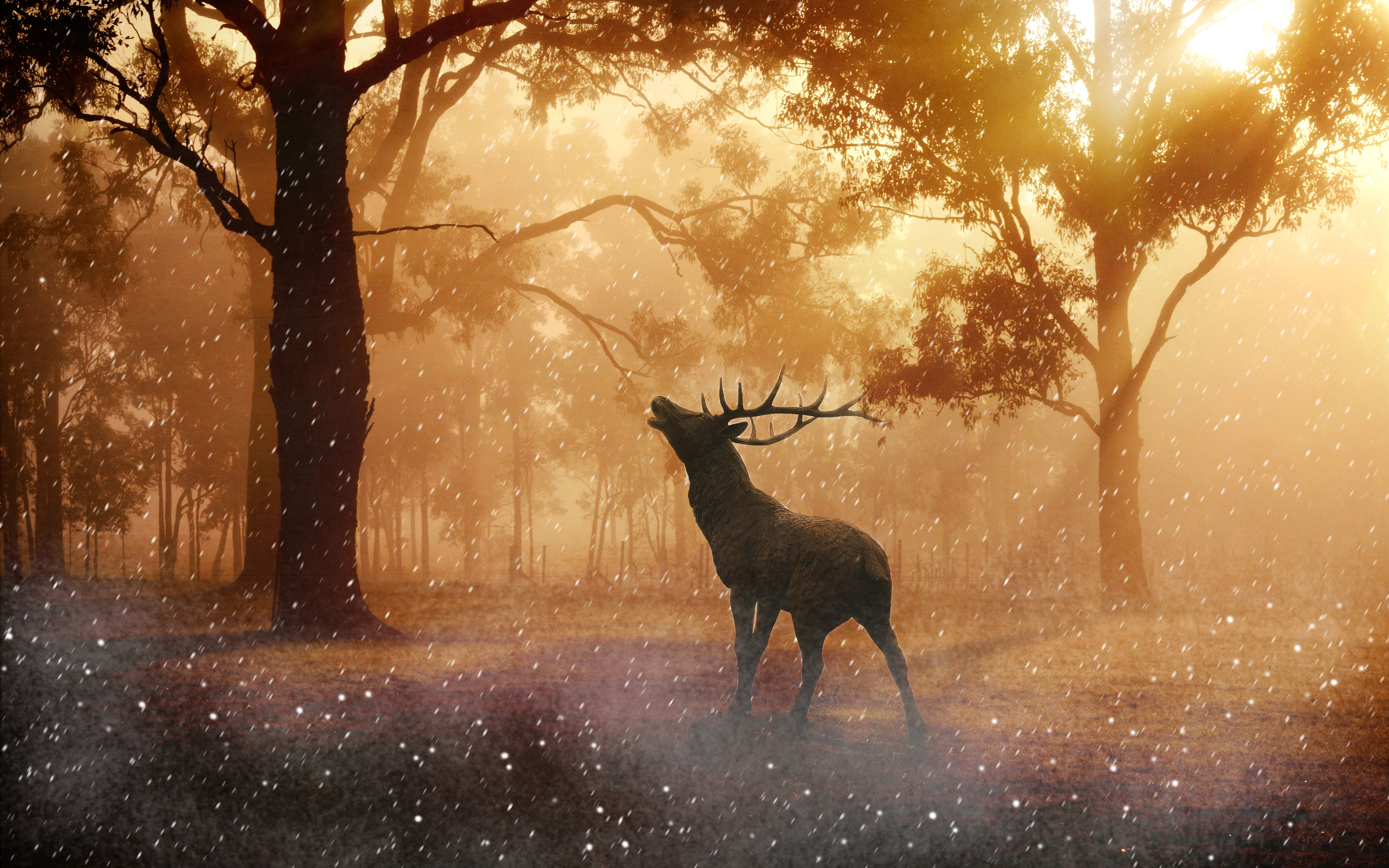 Autumn And Deer