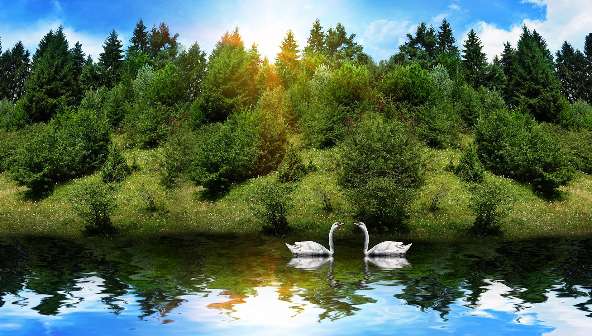 Swans and Scenery Wallpaper